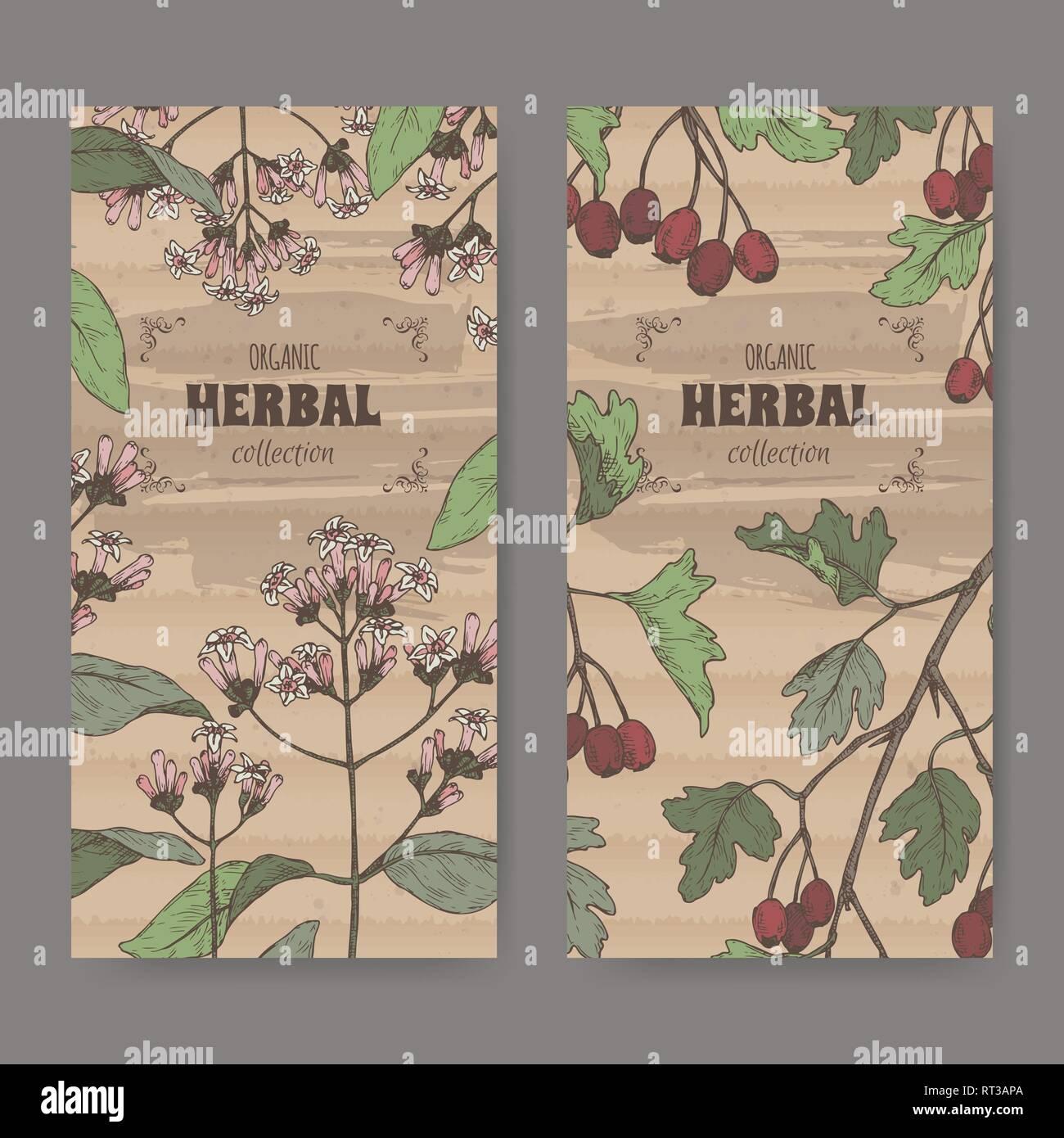 Due etichette con China officinalis aka chinina o corteccia dei gesuiti e Crataegus monogyna aka biancospino schizzo a colori. Immagini Stock