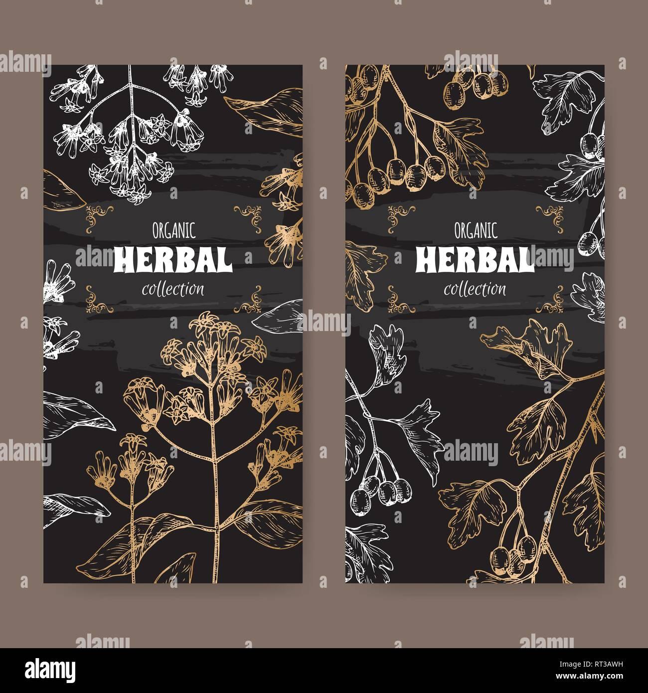 Due etichette con China officinalis aka chinino e Crataegus monogyna aka biancospino schizzo su nero. Immagini Stock