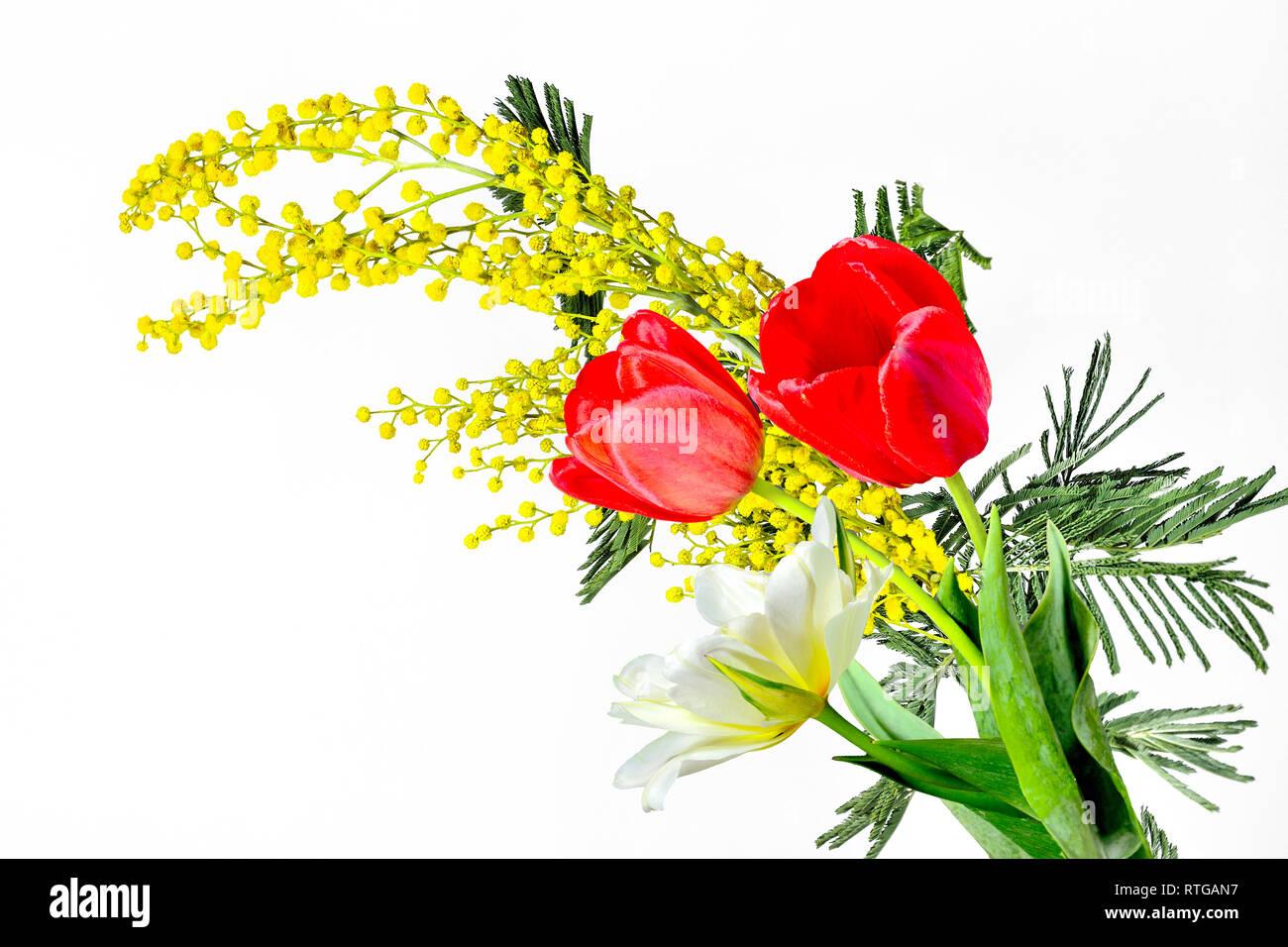 La molla bouquet di rosso e bianco-giallo tulipani e ramo di fioritura  Mimosa ( 089fd68ced93