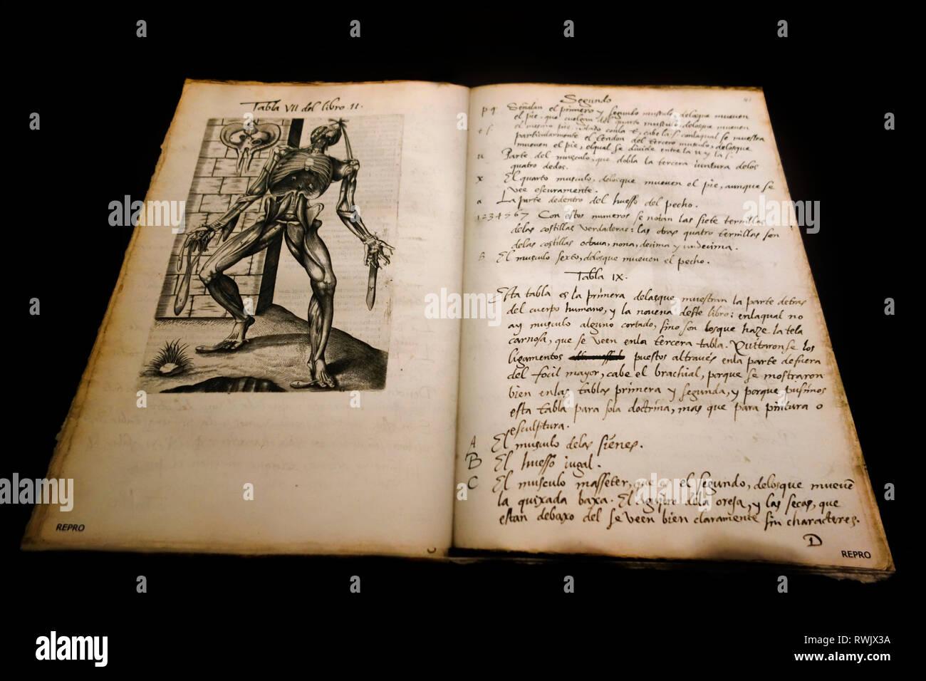Il XVI secolo spagnolo traduzione di Vivae immagina partium corporis humani da Joannes Valverde, plagio di Fabrica da Vesalius, libro sulla anatomia Immagini Stock