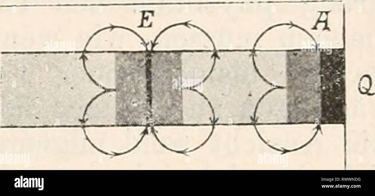 """Elektrophysiologie (1895) Elektrophysiologie elektrophysiolog00bied Anno: 1895 Die elektromotorischen Wirkungen der Nerven. 731 wissen Jonen beladen, gleichsam als ob sie durch einen von aussen zugeführten Strom polarisirt worden wären'. Es wurde schon un anderer Stelle bemerkt, dass Bernstein auf Grund dieser """"elek- trochemischen Molekulartheorie' alle galvanischen Erschei- nungen un Muskeln und Nerven zu erklären bestrebt ist. Es darf aber füglich bezweifelt werden, ob derartige weitgehende und detaillirte Speculationen über Molekularstructur und den Aufbau der lebenden Substanzen besser ge Foto Stock"""