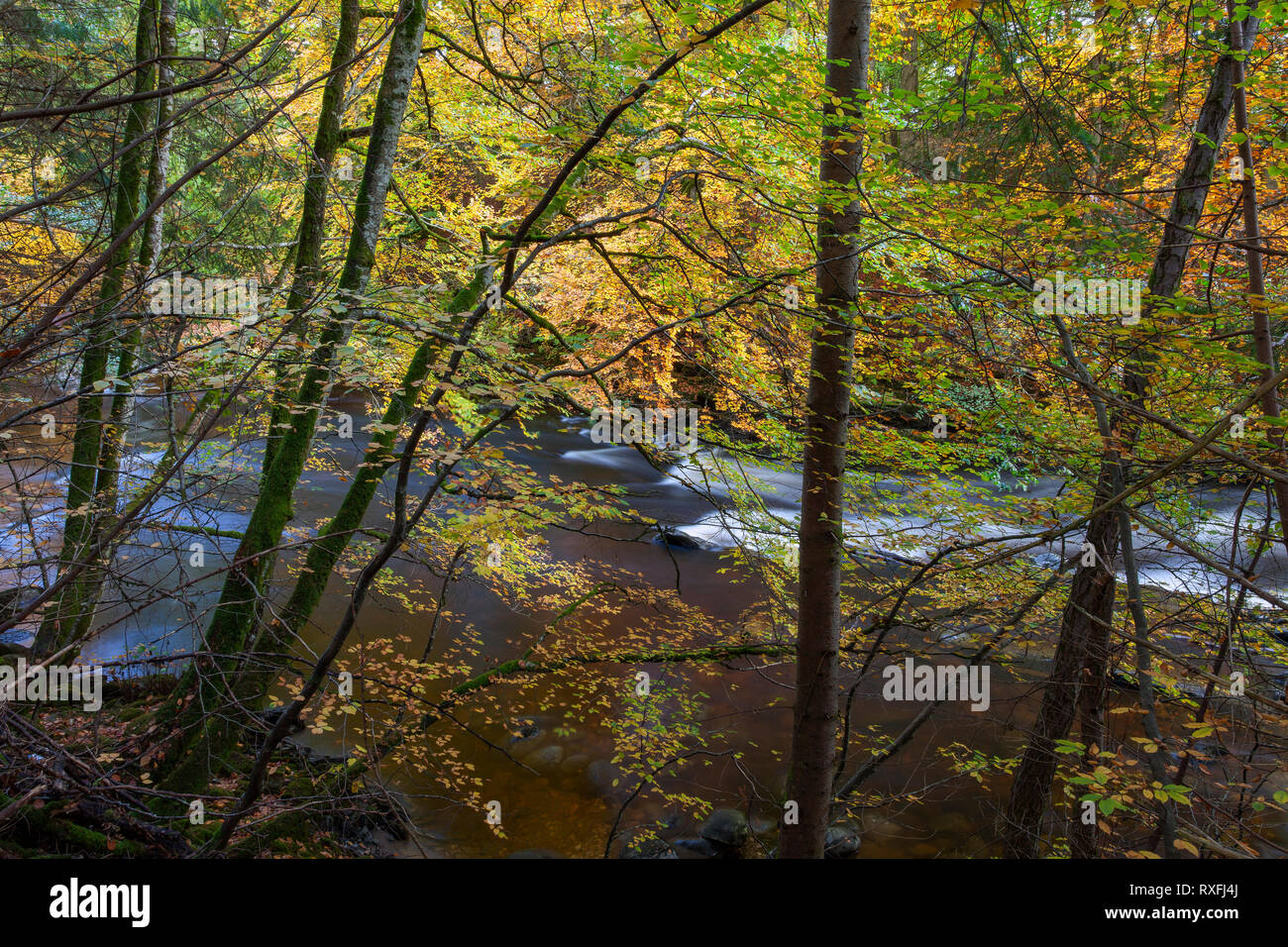 Autunno lungo il fiume inclinazione, Glen Tilt vicino a Blair Atholl, Scozia Immagini Stock
