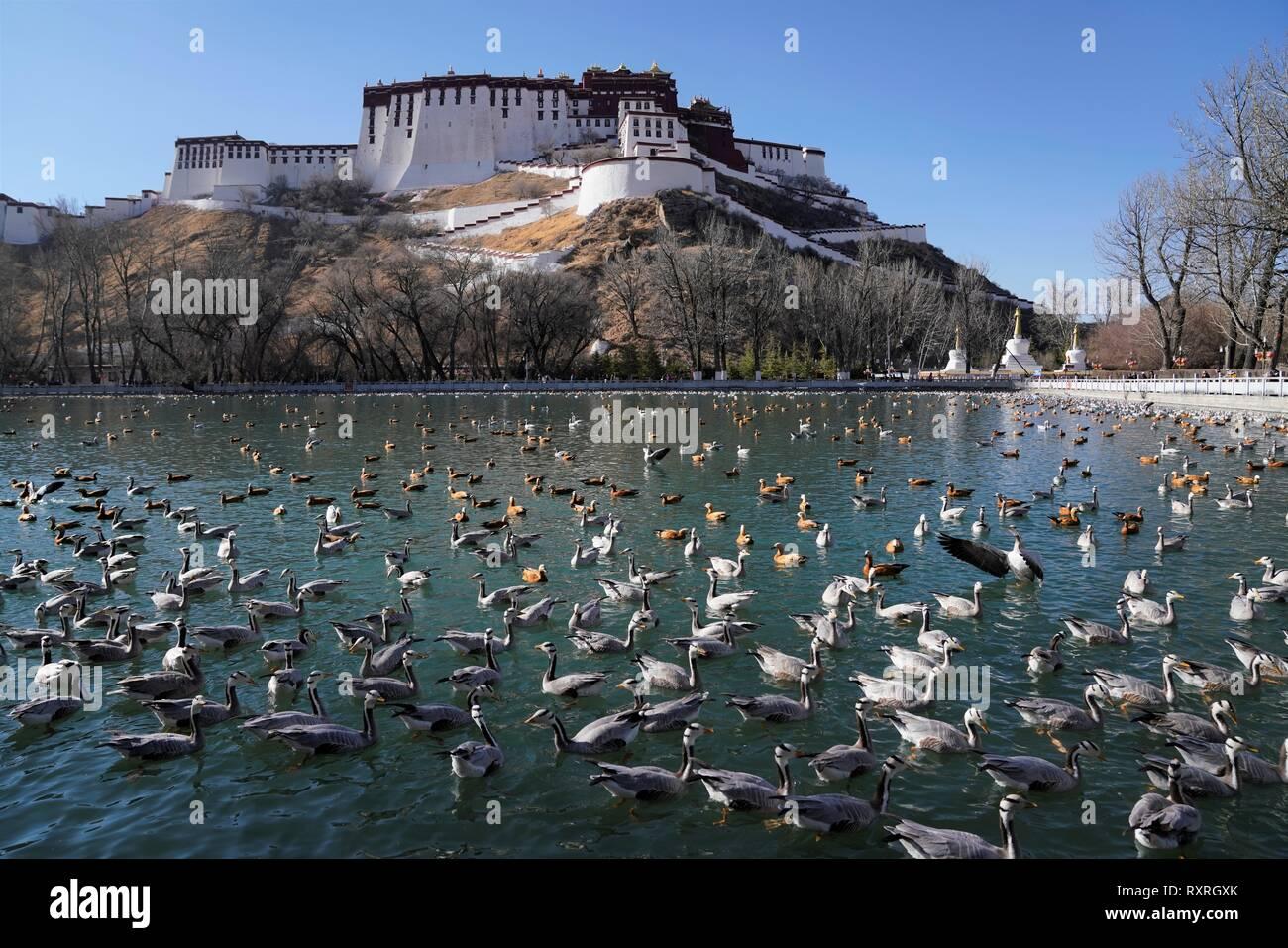 Lhasa. Decimo Mar, 2019. Foto scattata il 10 marzo 2019 mostra la vista di un parco nelle vicinanze del Palazzo del Potala a Lhasa, capitale del sud-ovest della Cina di regione autonoma del Tibet. Credito: Purbu Zhaxi/Xinhua/Alamy Live News Foto Stock