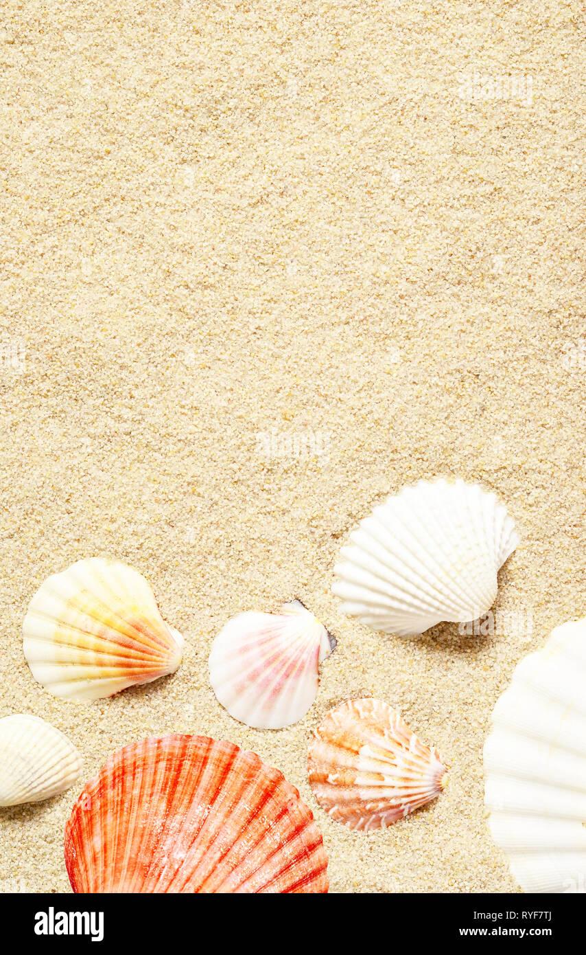 Conchiglie Di Mare Sulla Spiaggia Di Sabbia Estate Sfondo Vista