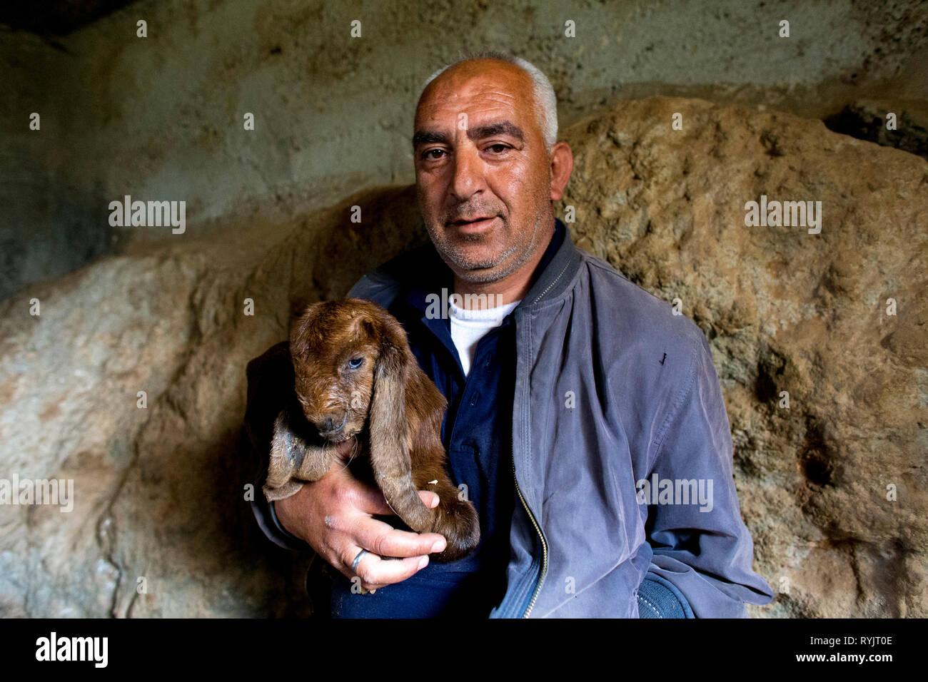 Disabilitato Abed Alsalahm Mohammed Abed Mahdi Khamaiseh ha ricevuto un interesse-free US$4000 prestito da ACAD finanziare per sollevare i bovini in Taffoh, West Bank, Immagini Stock