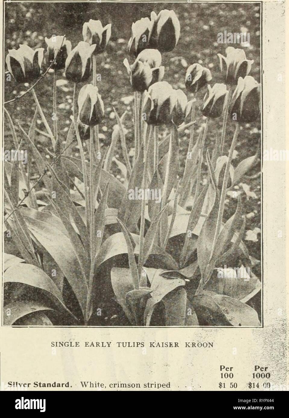 Dreer all'ingrosso listino prezzi Dreer all'ingrosso listino prezzi : lampadine per fioristi impianti per fioristi semi di fiori per fioristi fungicidi, fertilizzanti, insetticidi, attrezzi, ecc . dreerswholesalep1912henr Anno: 1912 DOPPIO TULIPANI MURILLO Argento Standard. Bianco, crimson striped .... Sir Thos. Lipton. Il più ricco di tutti i tulipani scarlatto, ultra-sottili 2 35 22 00 Thomas Moore. Arancio brillante, fine 85 7 00 Vermiglio brillante. Vermiglio scarlet, fine. . . 185 17 50 Falco bianco (Albion). Un bel bianco puro bedder o forzare l 50 13 00 Wouverman. Violetto, ammenda bedder 2 50 24 00 Prince giallo. Golden Foto Stock
