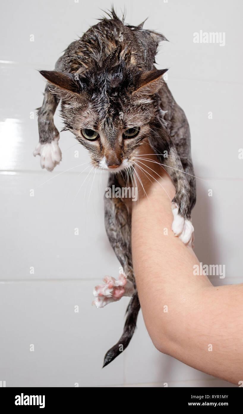 bagnato n selvaggio nero micio Pornorama xxx