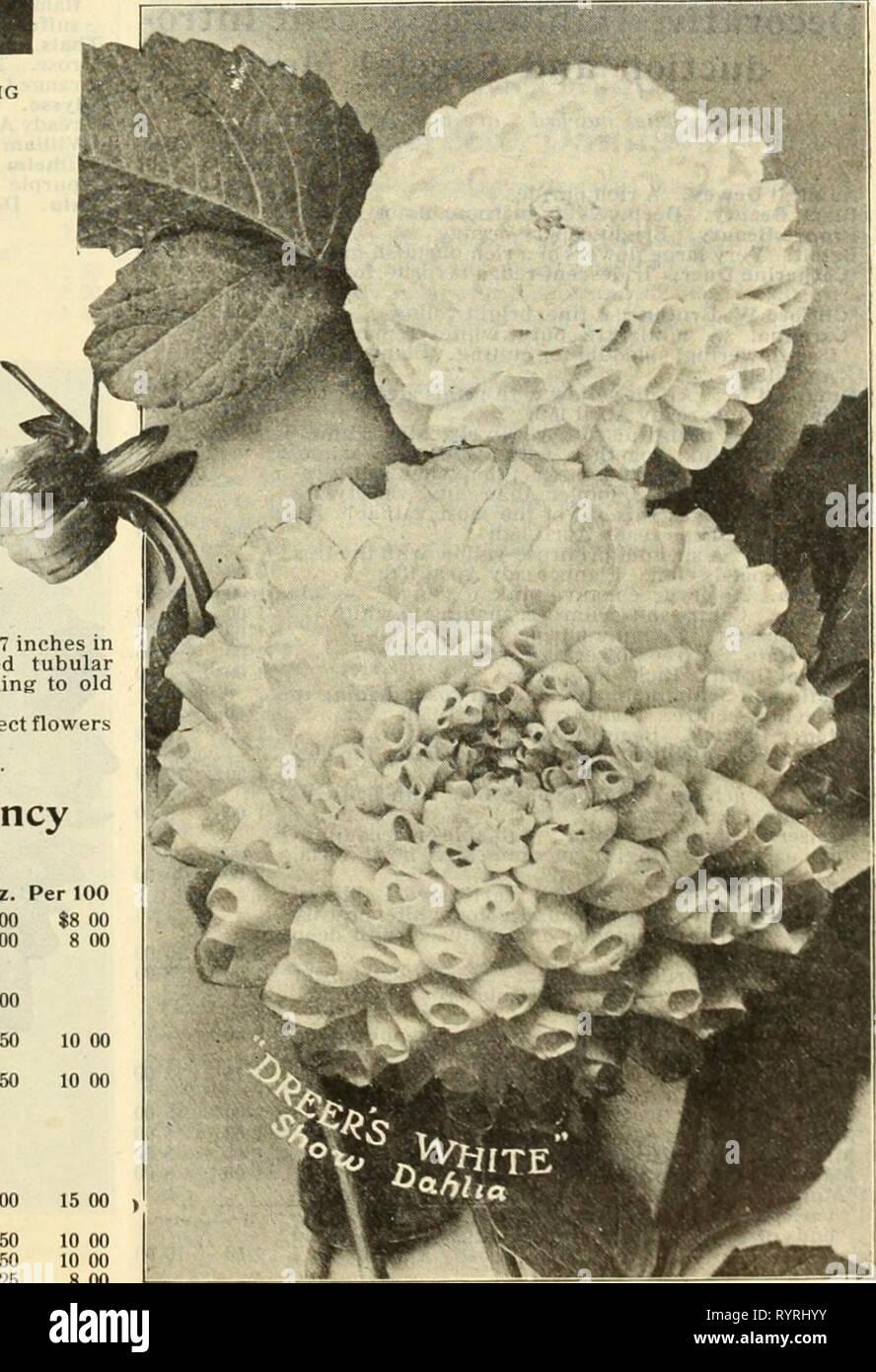 """Dreer all'ingrosso listino prezzi di Dreer all'ingrosso listino prezzi di semi di piante e bulbi per fioristi : fertilizzanti, insetticidi, strumenti e varie . dreerswholesalep1912henr_1 Anno: 1912 Doppio spettacolo e fantasia dalie-continua. Per doz. Per 100 Frank Smith. Intensa maroon ; ogni petalo ribaltato """"bianco tl 50 $10 00 dettysburg. Grandi e luminose, ricche scarlet ..... l 50 10 00 *Orand Duca Alexis. Grandi fiori massiccia, bianco-avorio, con un debole si tinge di rosa alle estremità dei petali 1 50 Hero. Anilina-rosso di buona forma 1 50 Isis (nuovo). Fiore di immense dimensioni, arancio-rosso scarlatto soffusa con auto Immagini Stock"""
