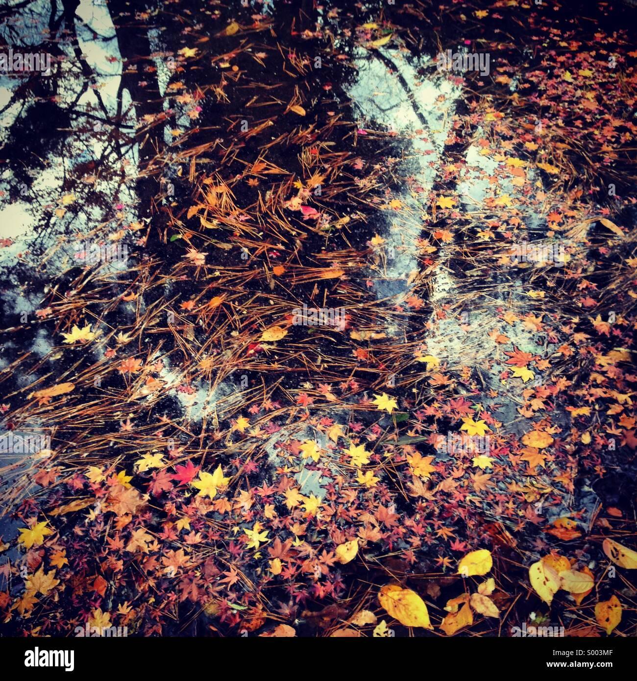 Caduto Foglie di autunno in un stagno, Tokyo, Giappone Immagini Stock