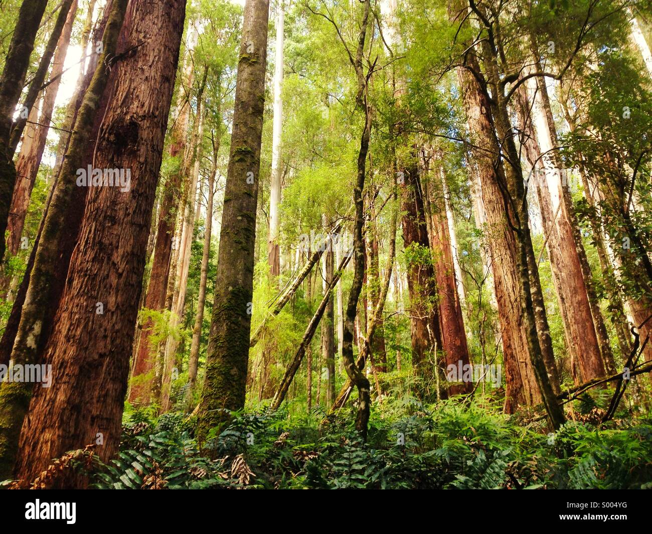Sogno di foresta Immagini Stock