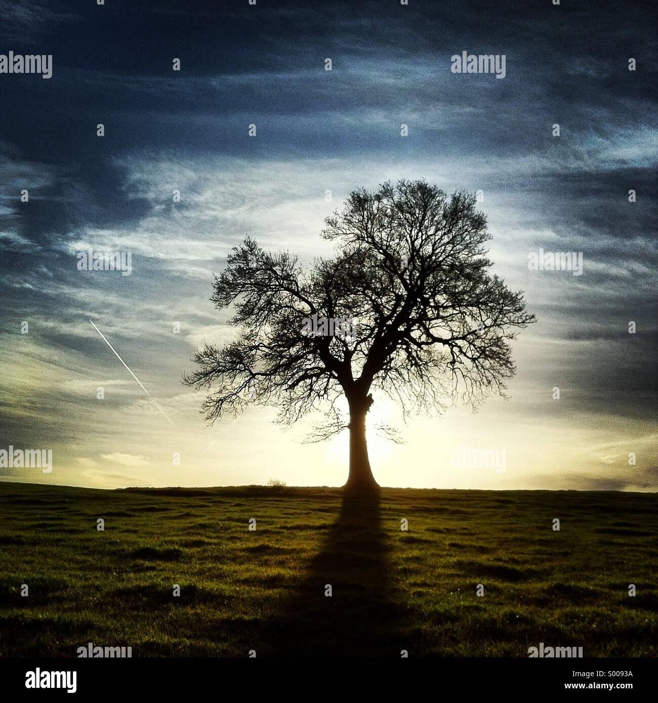 Silhouette di albero Immagini Stock