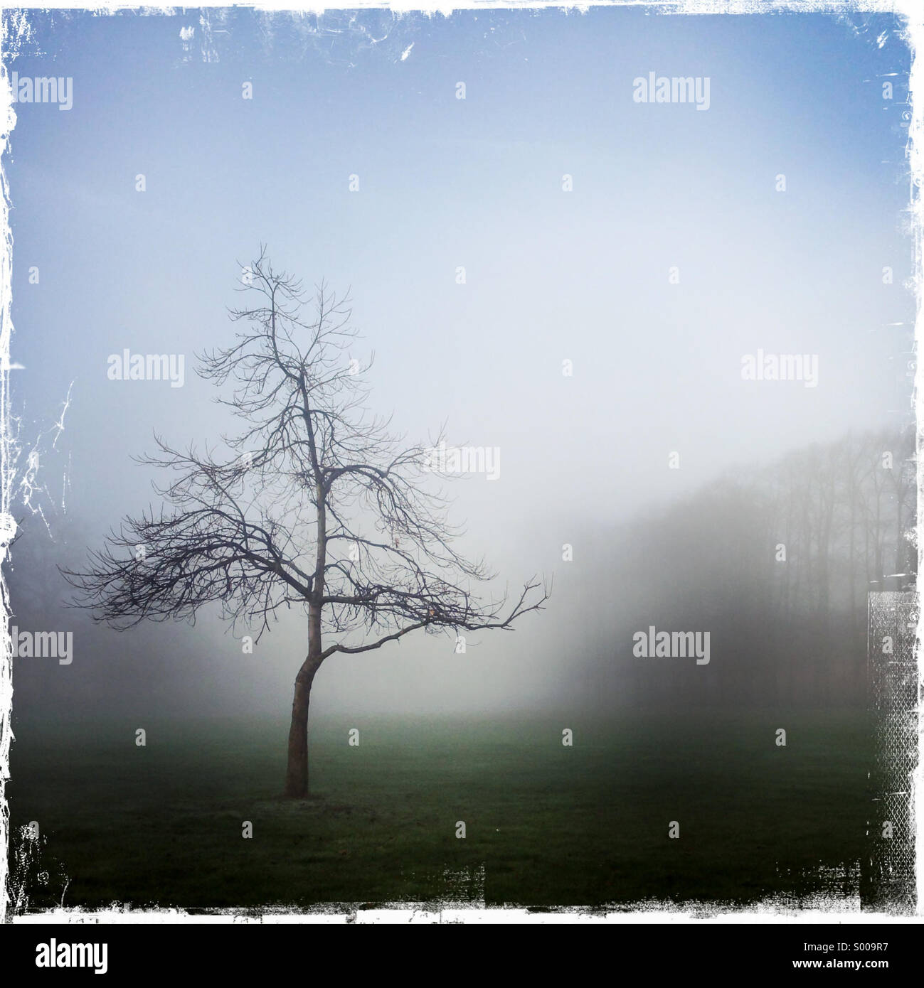 Albero isolato nella nebbia Immagini Stock