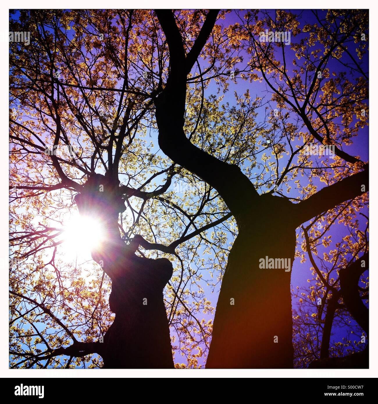 Albero con foglie giovani in sole di primavera Immagini Stock