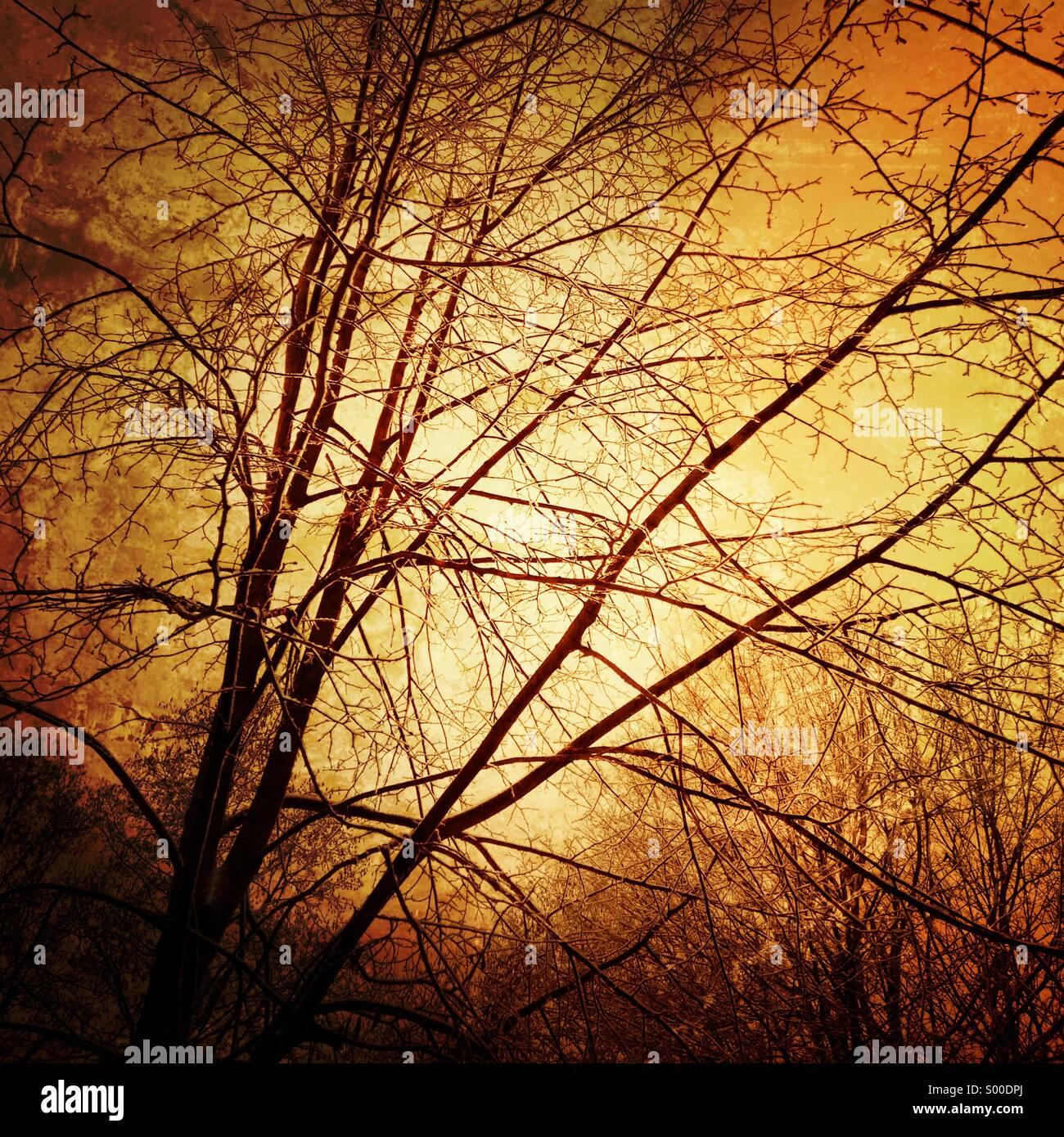 Albero d'inverno. Formato quadrato. Immagini Stock