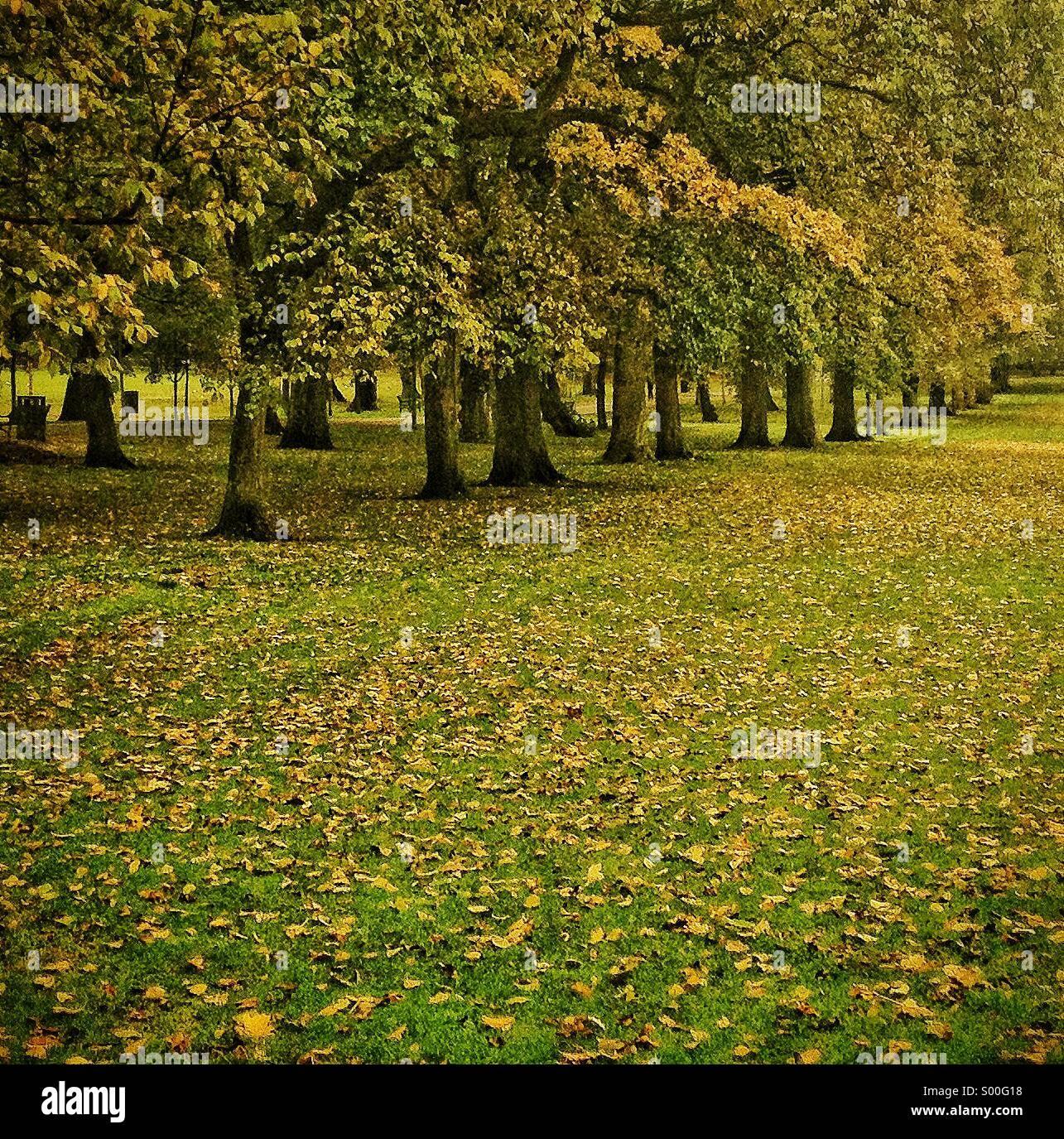 Alberi percorso rivestito in autunno, Edinburgh, Regno Unito Immagini Stock