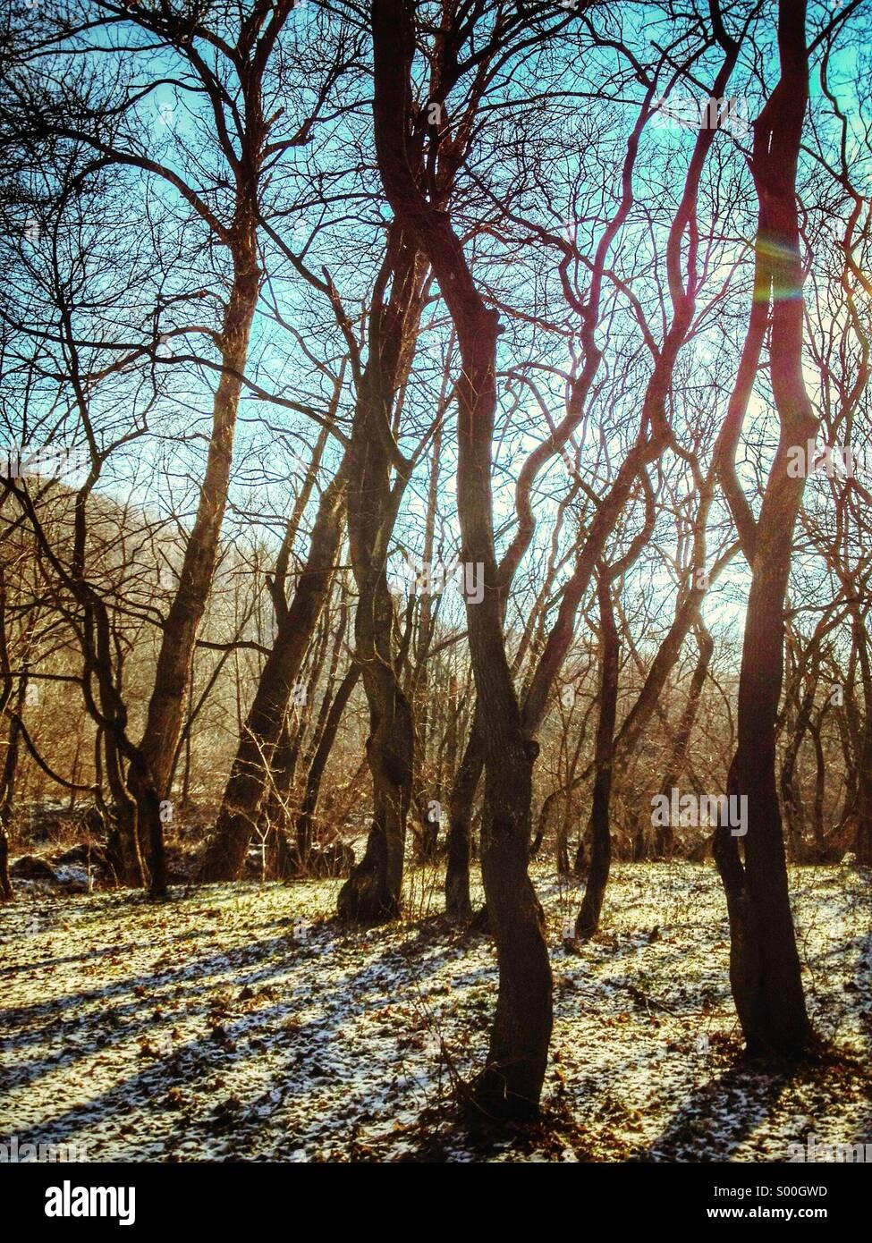 Alberi della foresta Immagini Stock