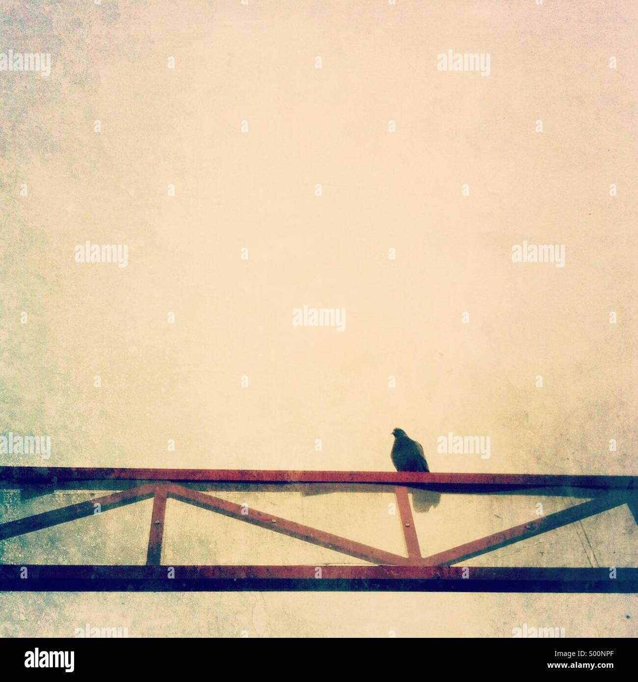 Lone pigeon posatoi sulla sommità di un rosso a traliccio metallico. Immagini Stock