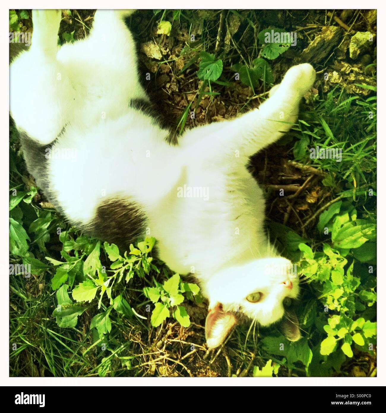 Un bel gatto felice fuori di porte. Immagini Stock