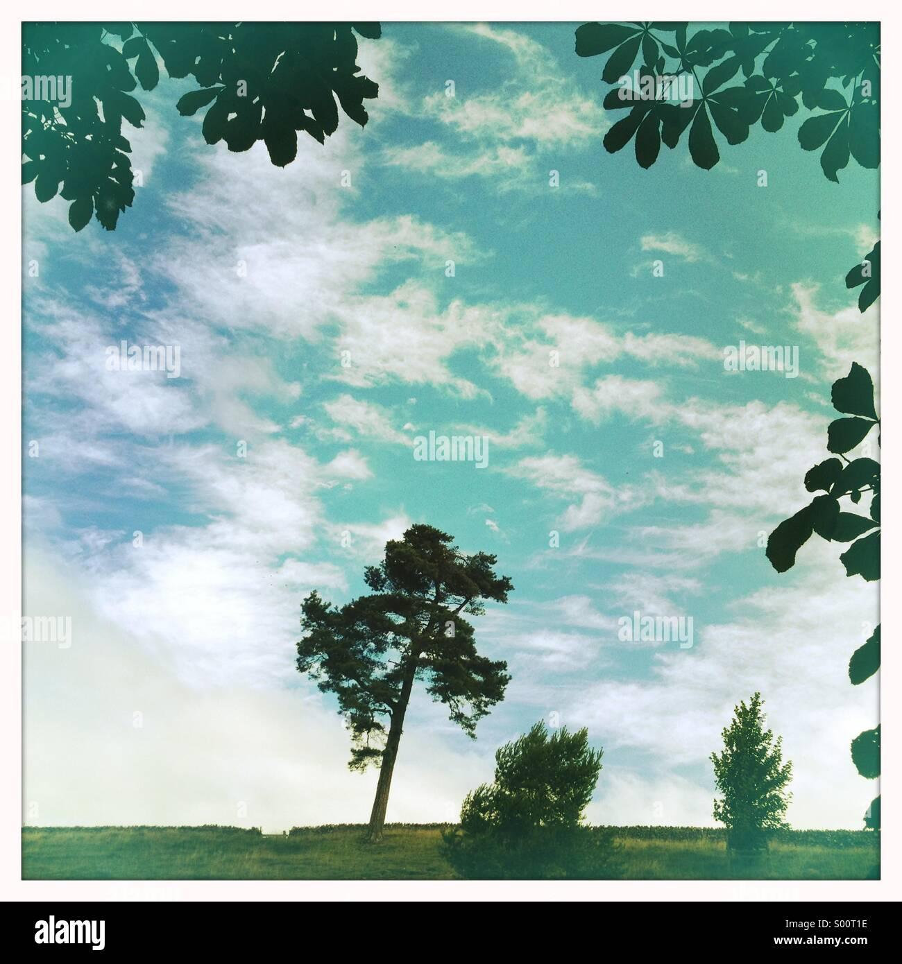 Cielo dell'albero Immagini Stock