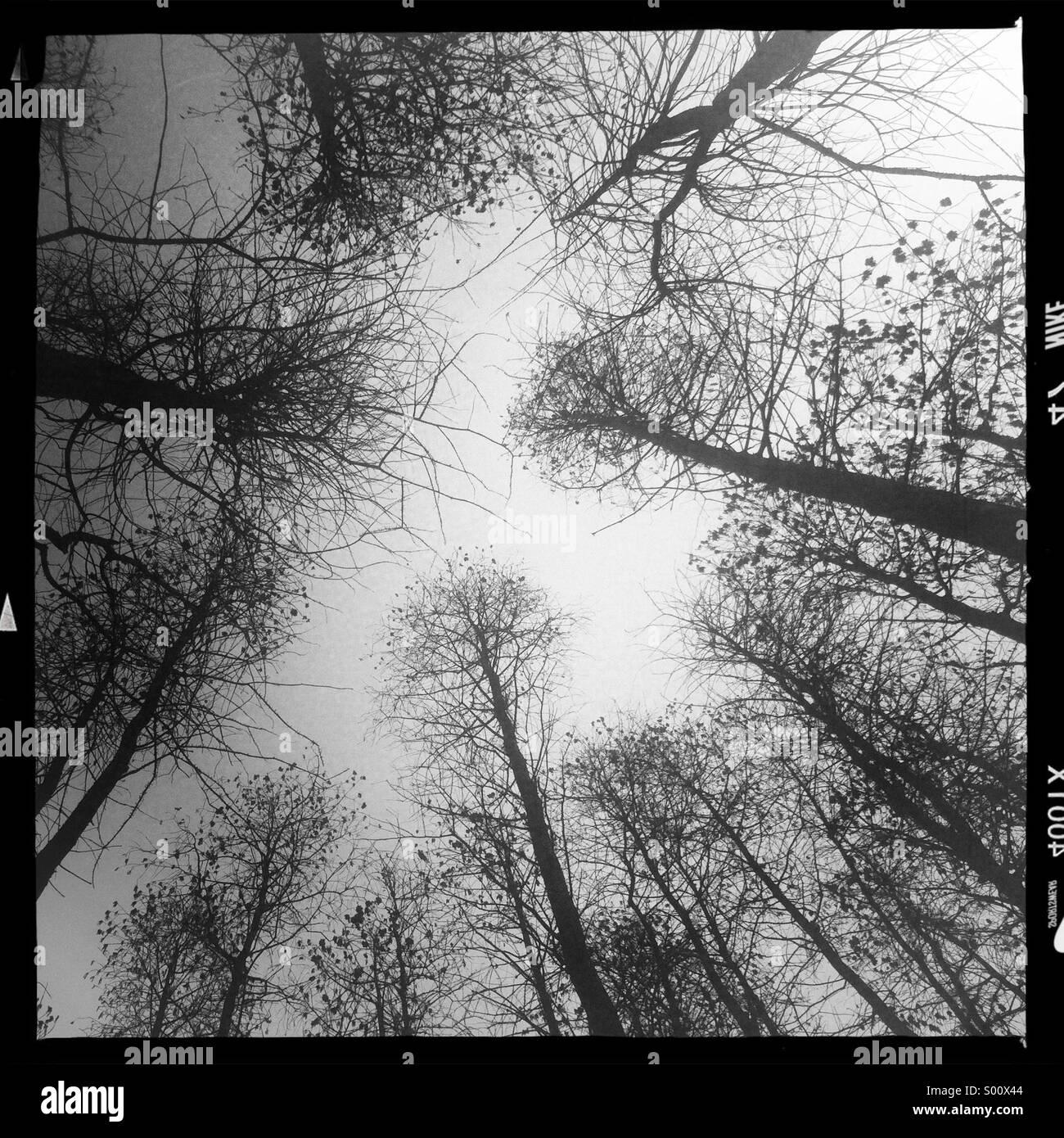 Foresta nebbiosa Immagini Stock