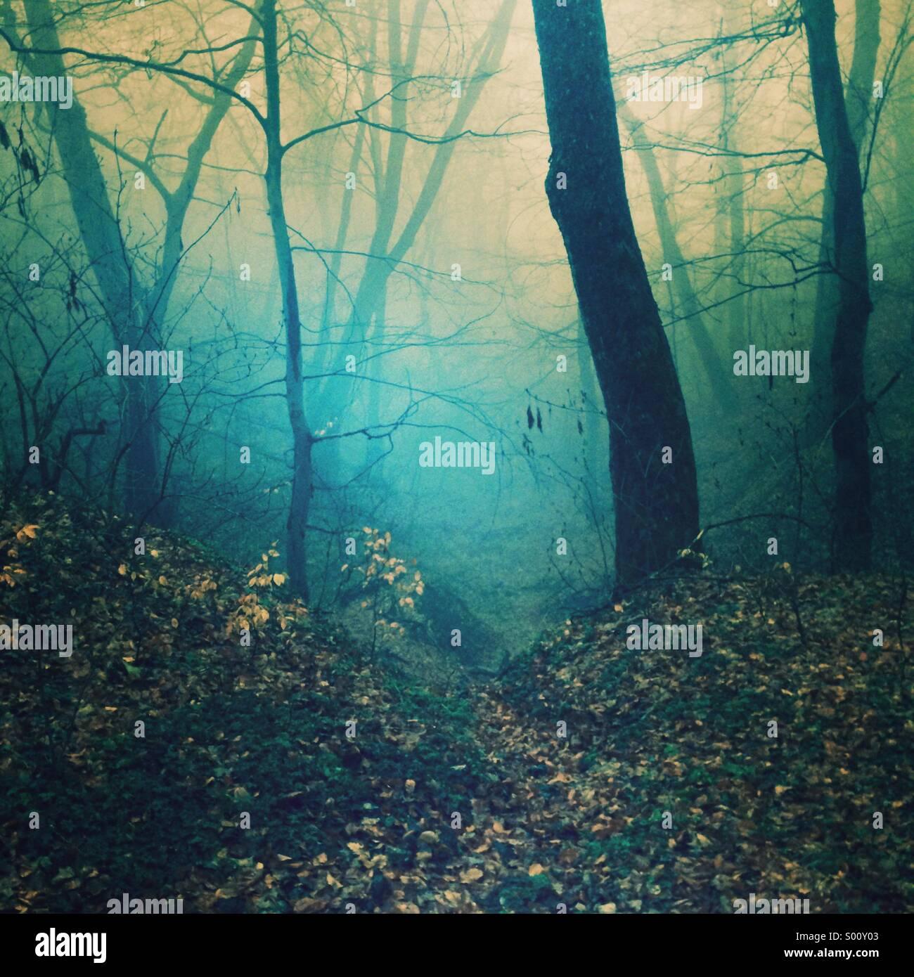Foresta mistico Immagini Stock
