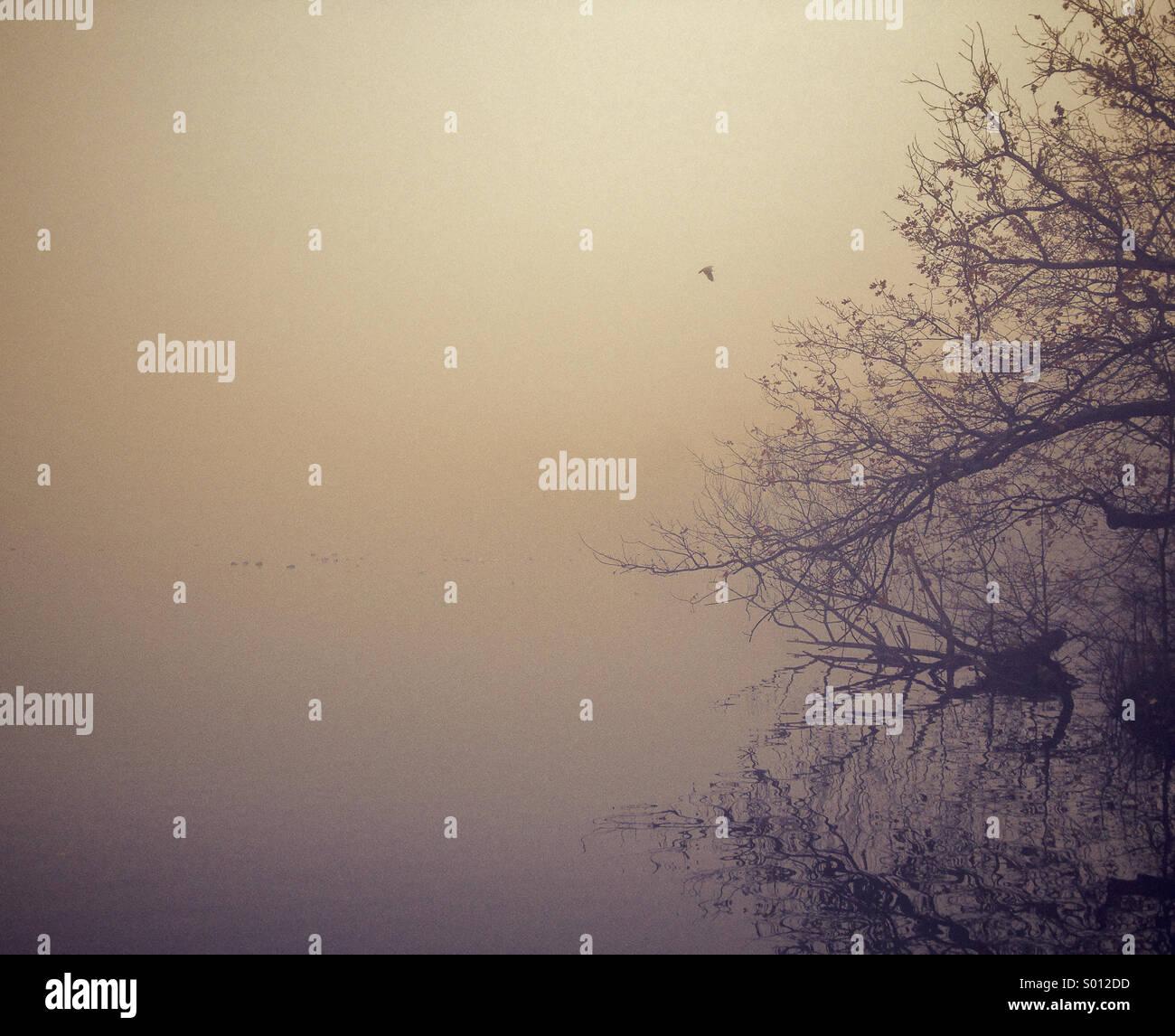 Mattinata nebbiosa sopra il lago Immagini Stock