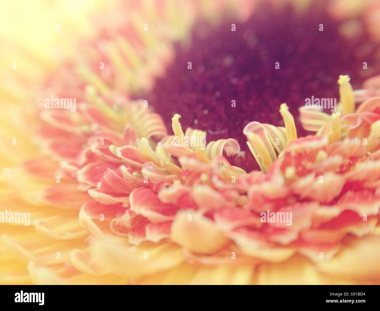 Sunshine Immagini Stock