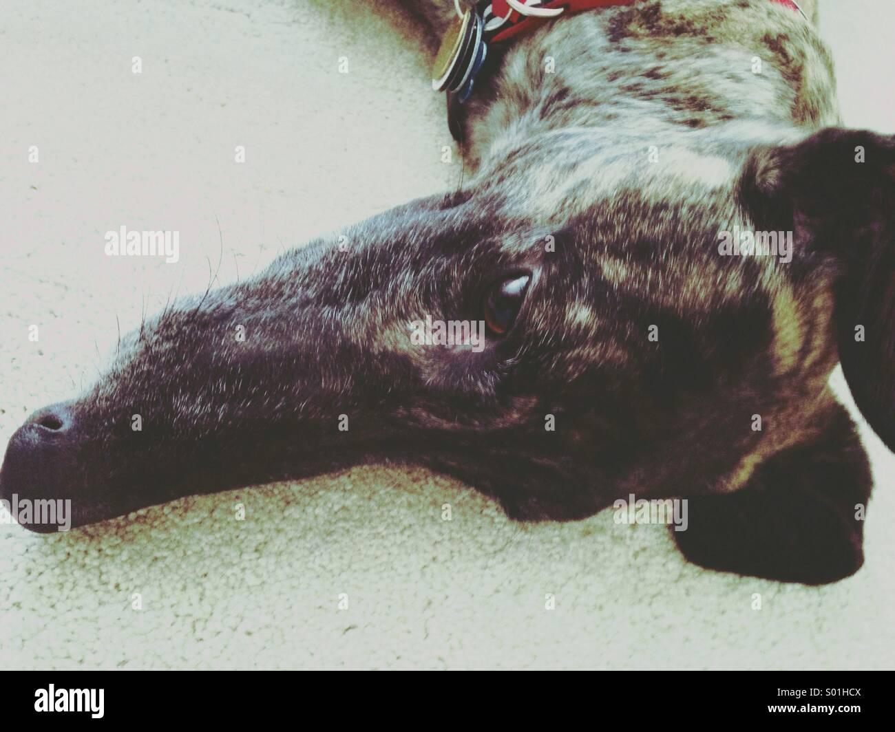 Dog days Immagini Stock
