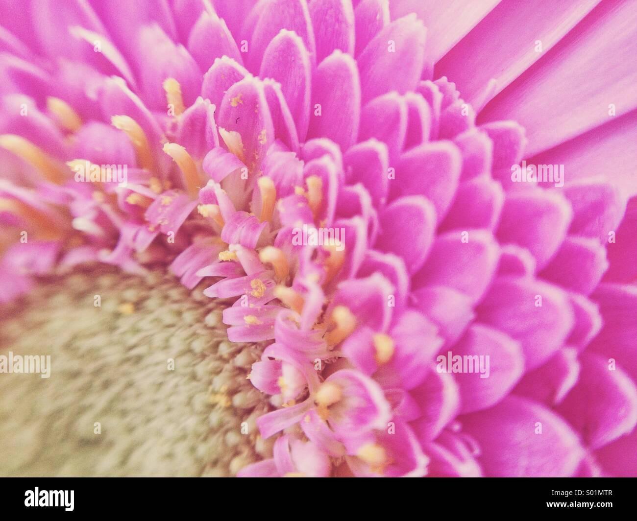 Fiore radiante Immagini Stock