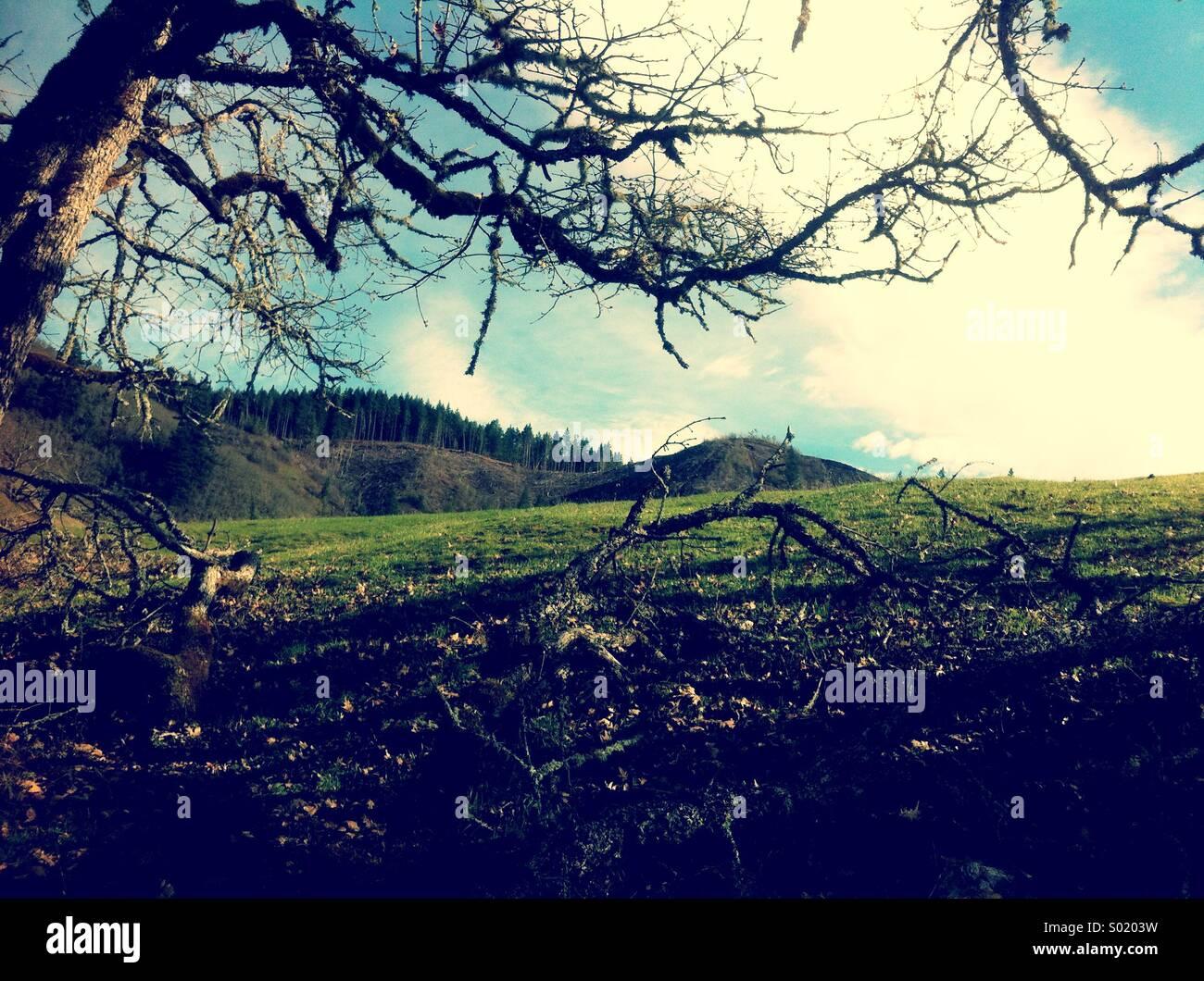 Verde collina in primavera Immagini Stock