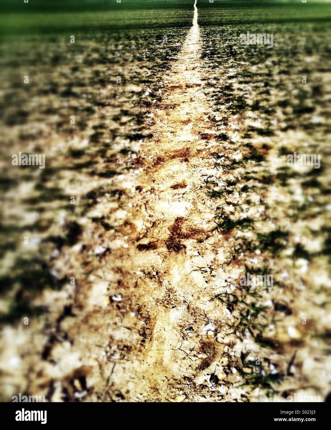 Il percorso attraverso il campo Immagini Stock
