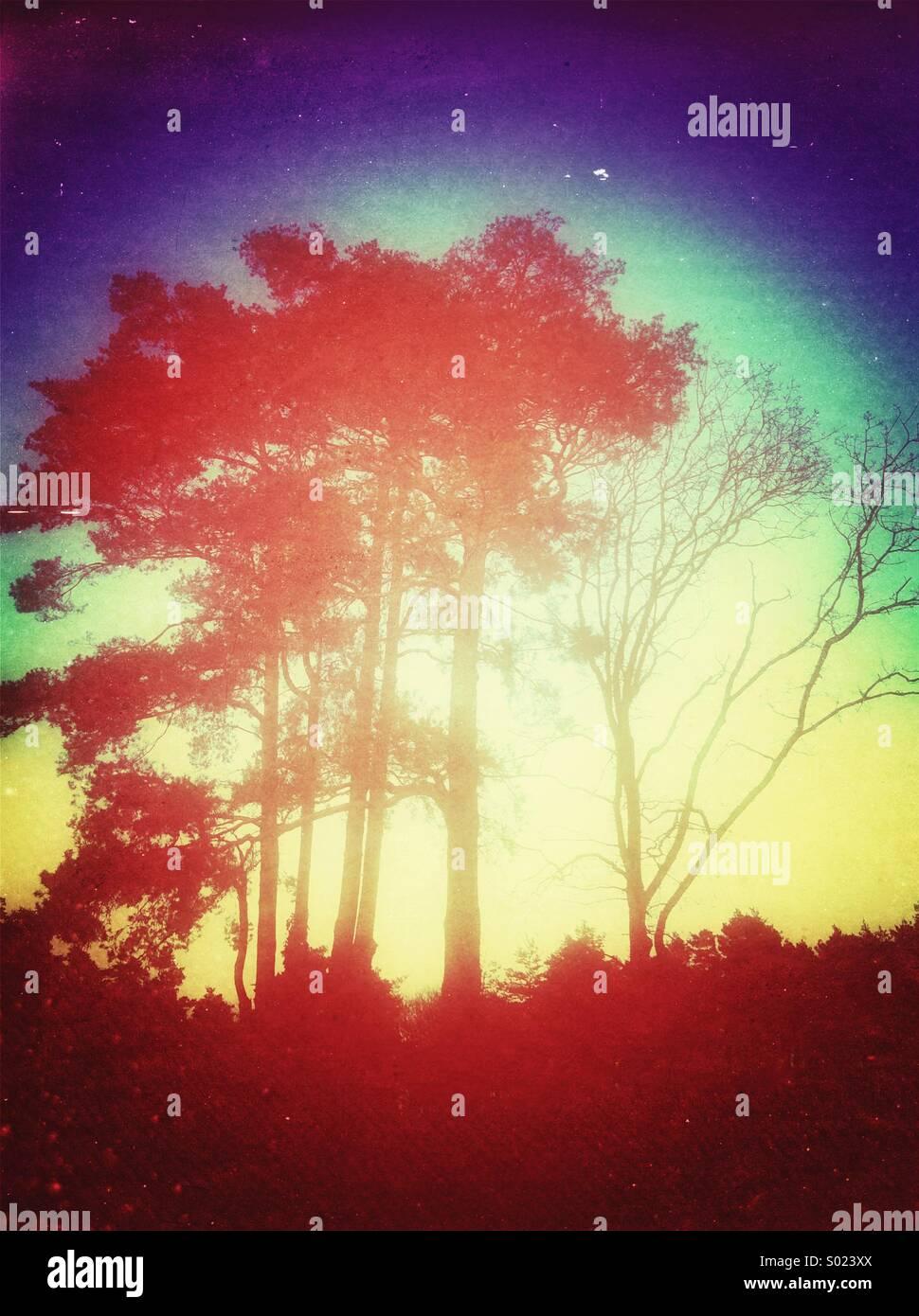 Enormi alberi silhouette Immagini Stock
