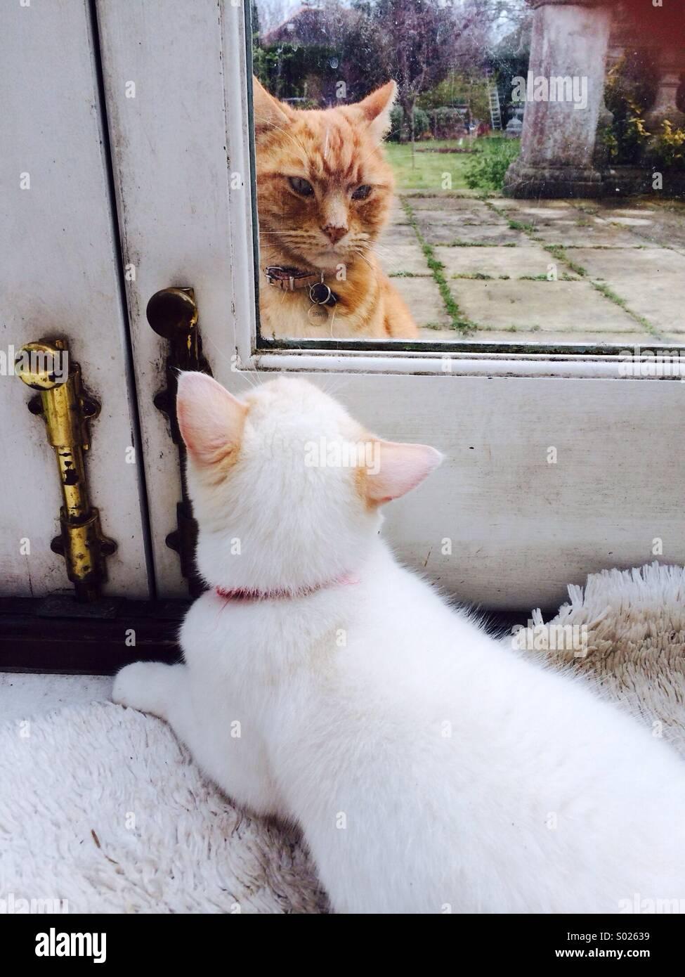 Visitatore presso la porta all'interno di cat e fuori cat Immagini Stock