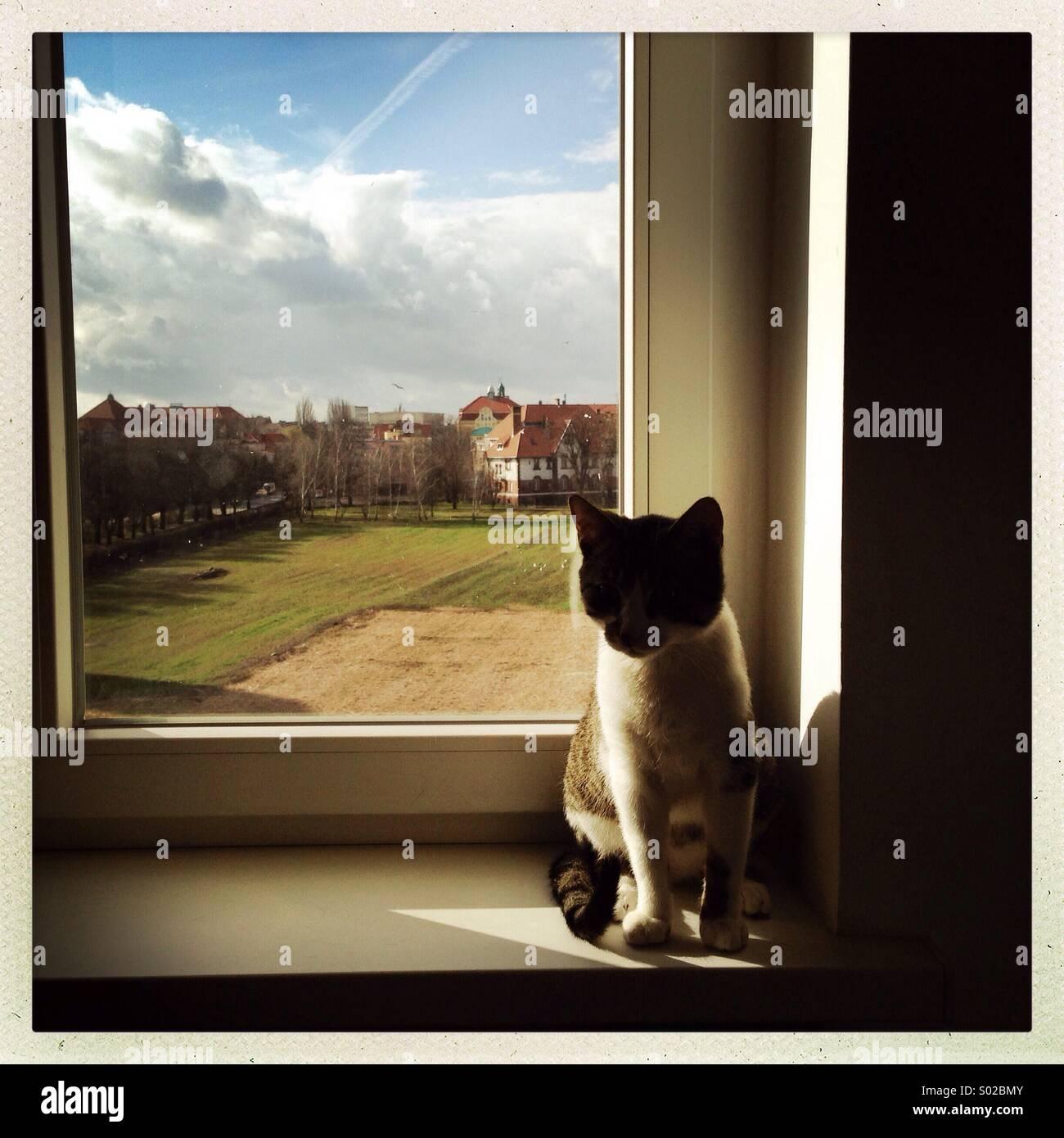Un gatto è visibile su un davanzale. Immagini Stock