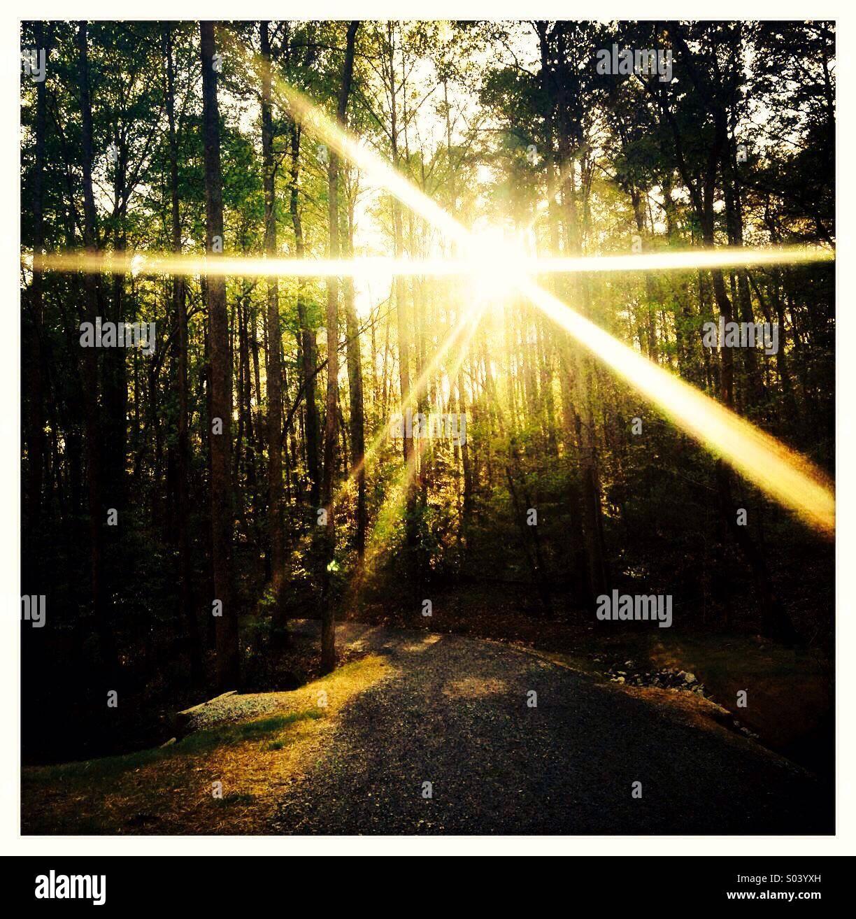 La luce del sole proveniente attraverso gli alberi nei boschi Immagini Stock