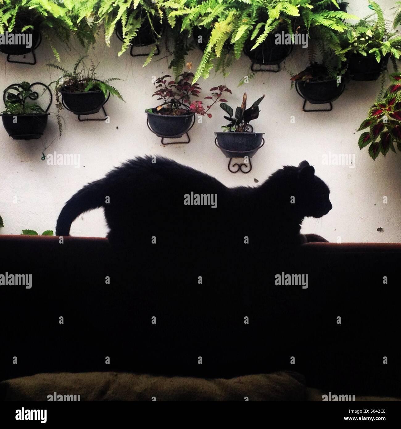 Un gatto nero si appoggia sulla parte superiore di un divano in una casa a Colonia Roma, Città del Messico, Immagini Stock