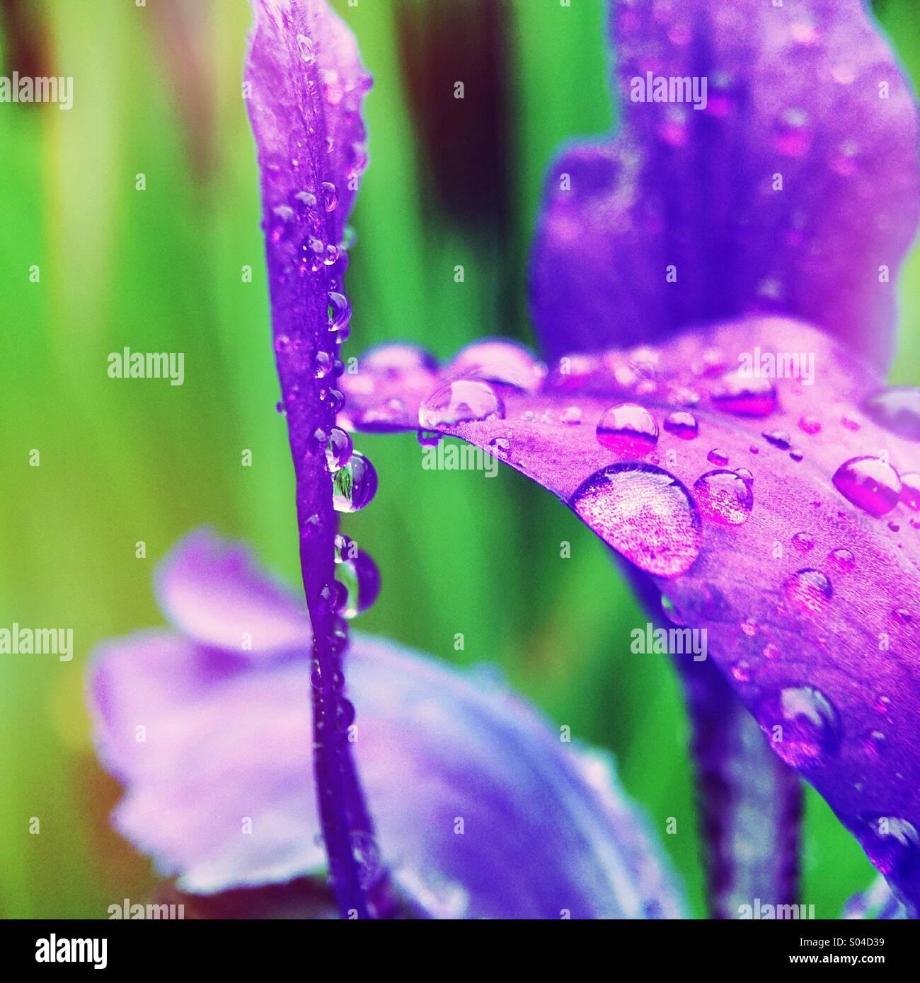 Close up di un diaframma ad iride. Immagini Stock