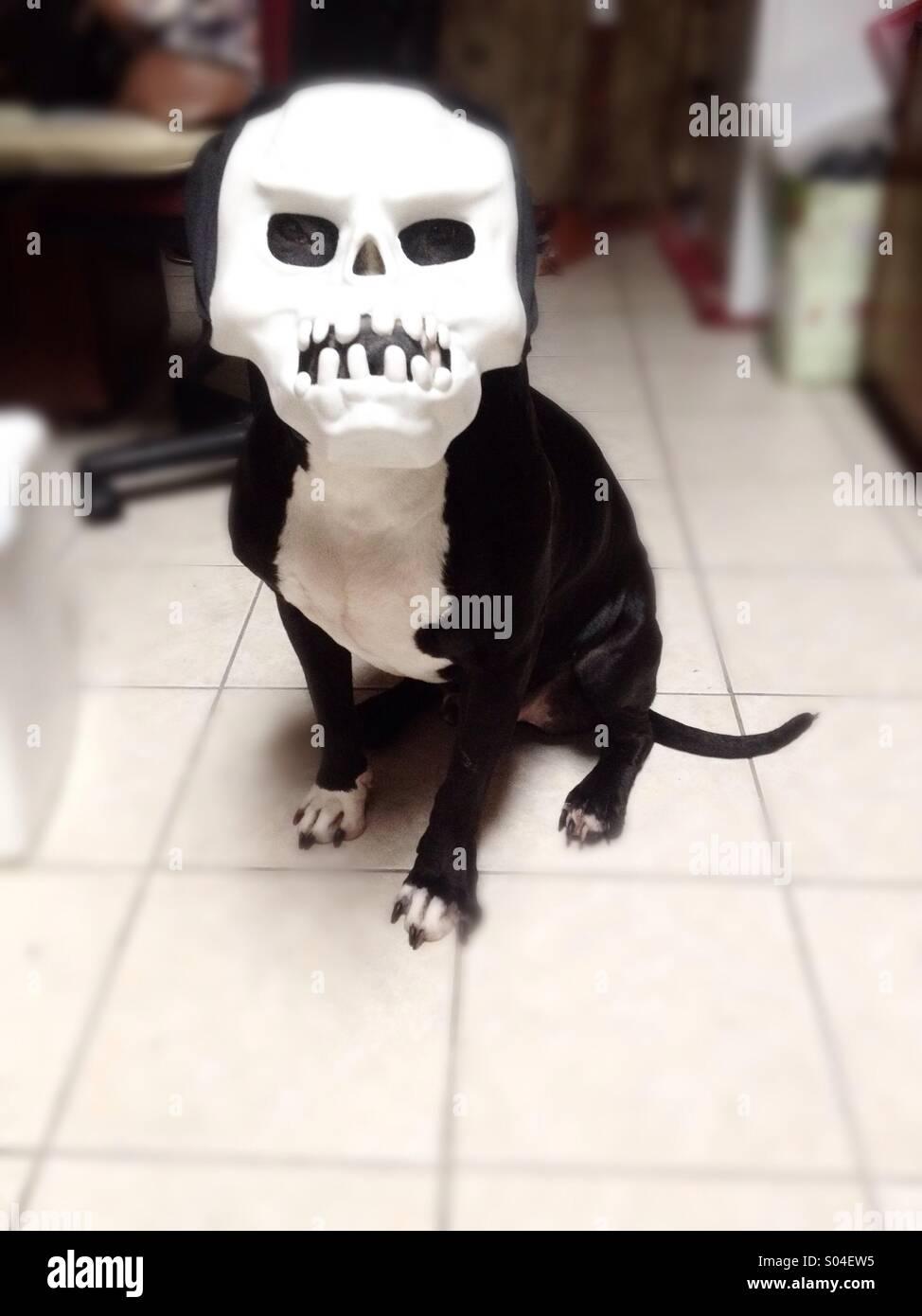 Cane mascherato Immagini Stock