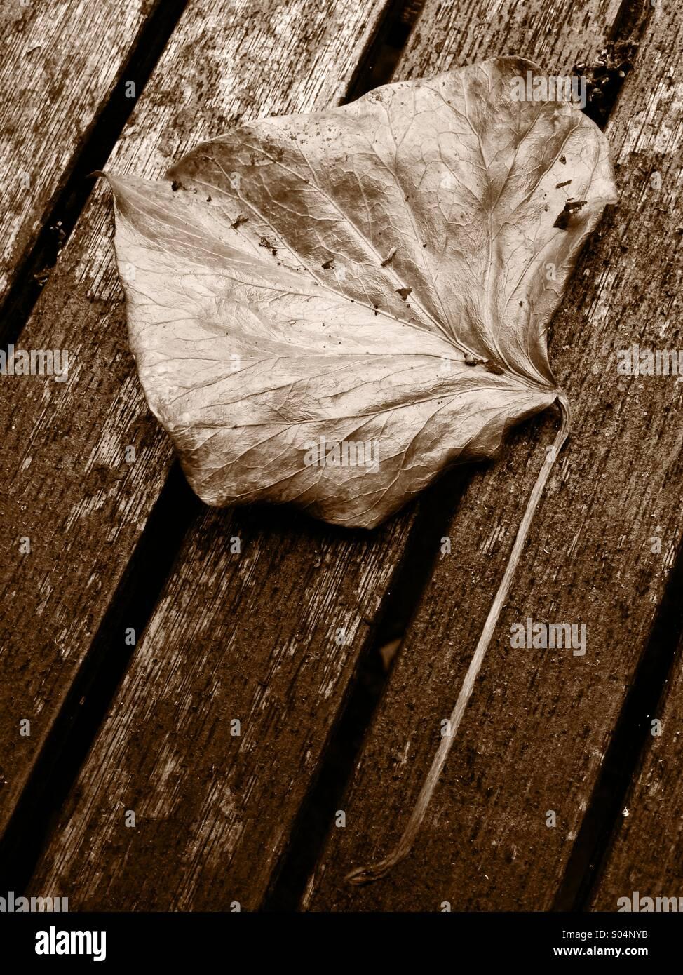 Fragile foglia essiccato su un tavolo. Immagini Stock