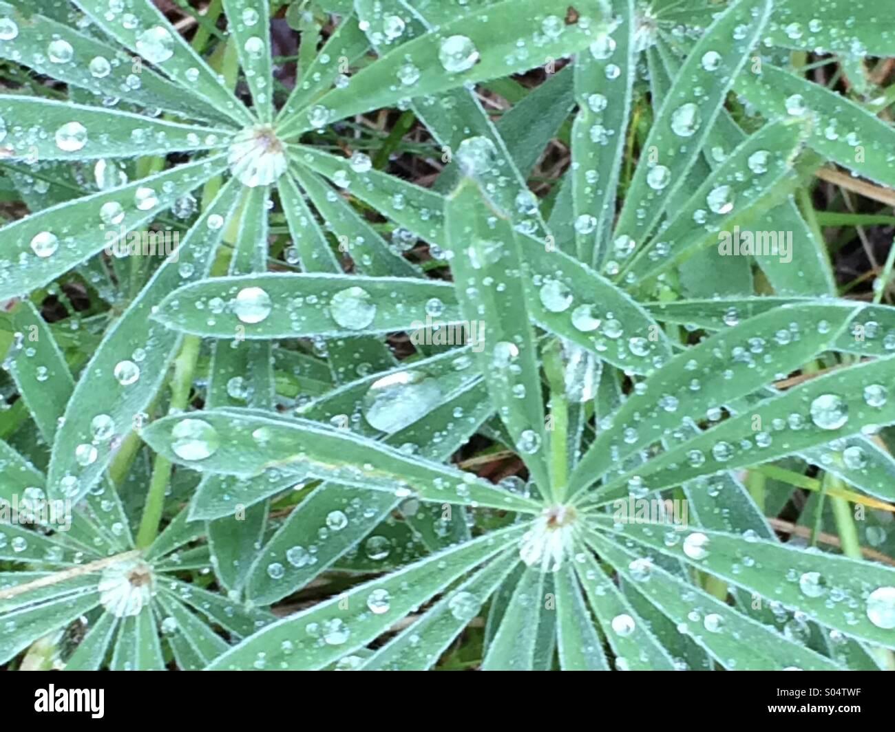 Le gocce di pioggia in appoggio Immagini Stock
