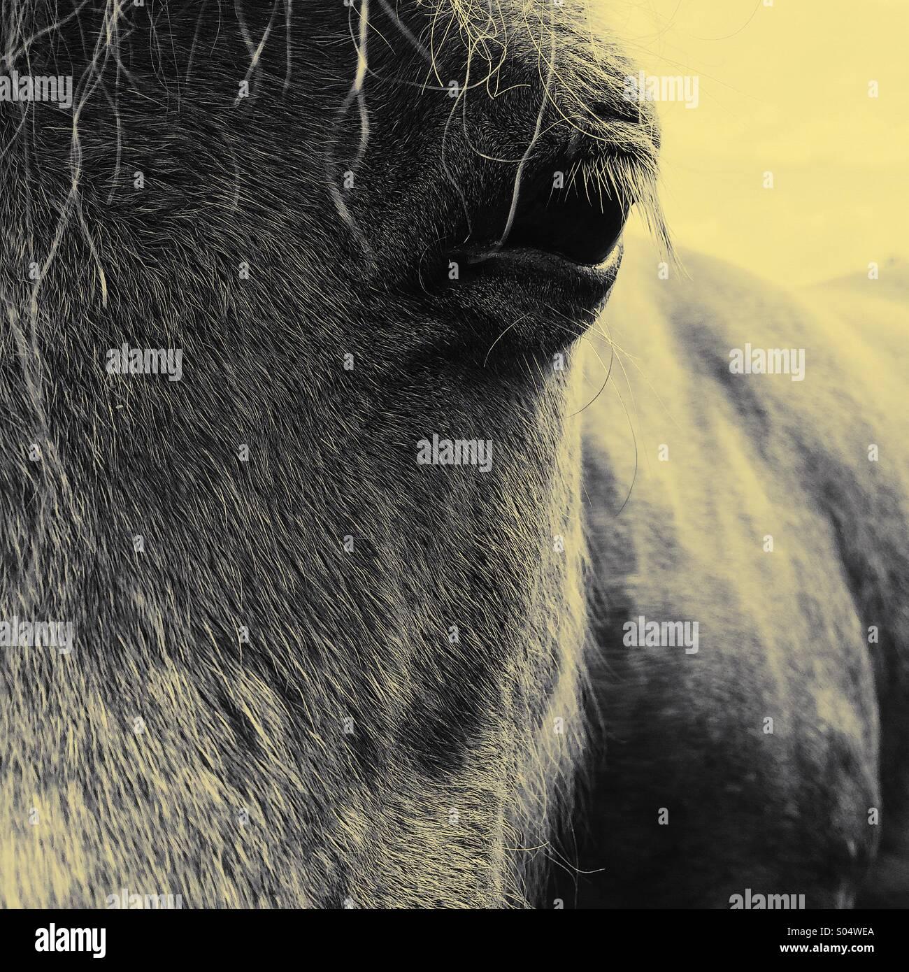Fronte di taglio del cavallo e chiudere occhio fino Immagini Stock