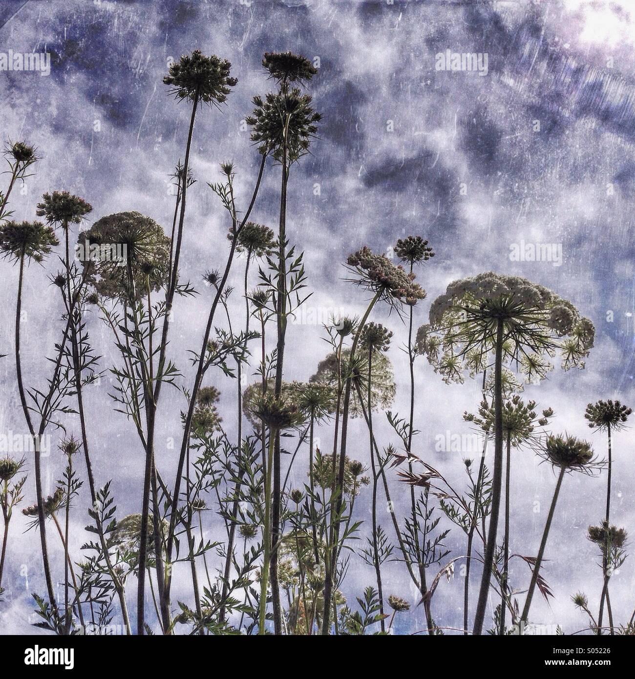 Pacific Northwest fiori selvatici Foto Stock