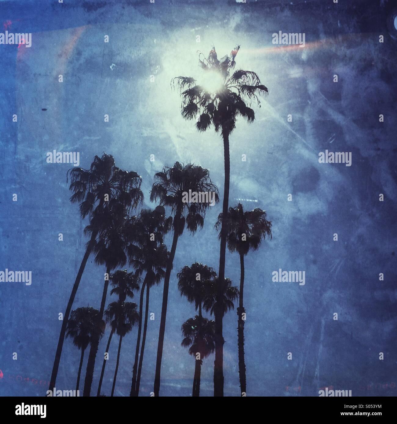 California Summer Sun piercing attraverso Palm tree Immagini Stock