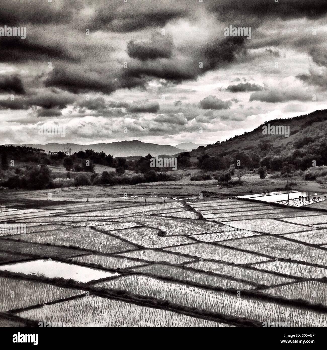 I campi di riso della Thailandia Immagini Stock