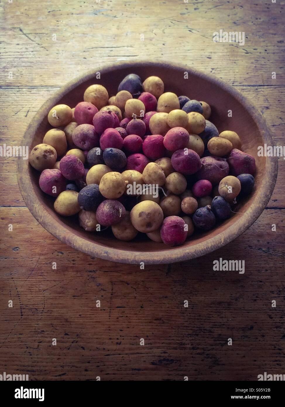 Azienda Agricola Patate fresche Immagini Stock