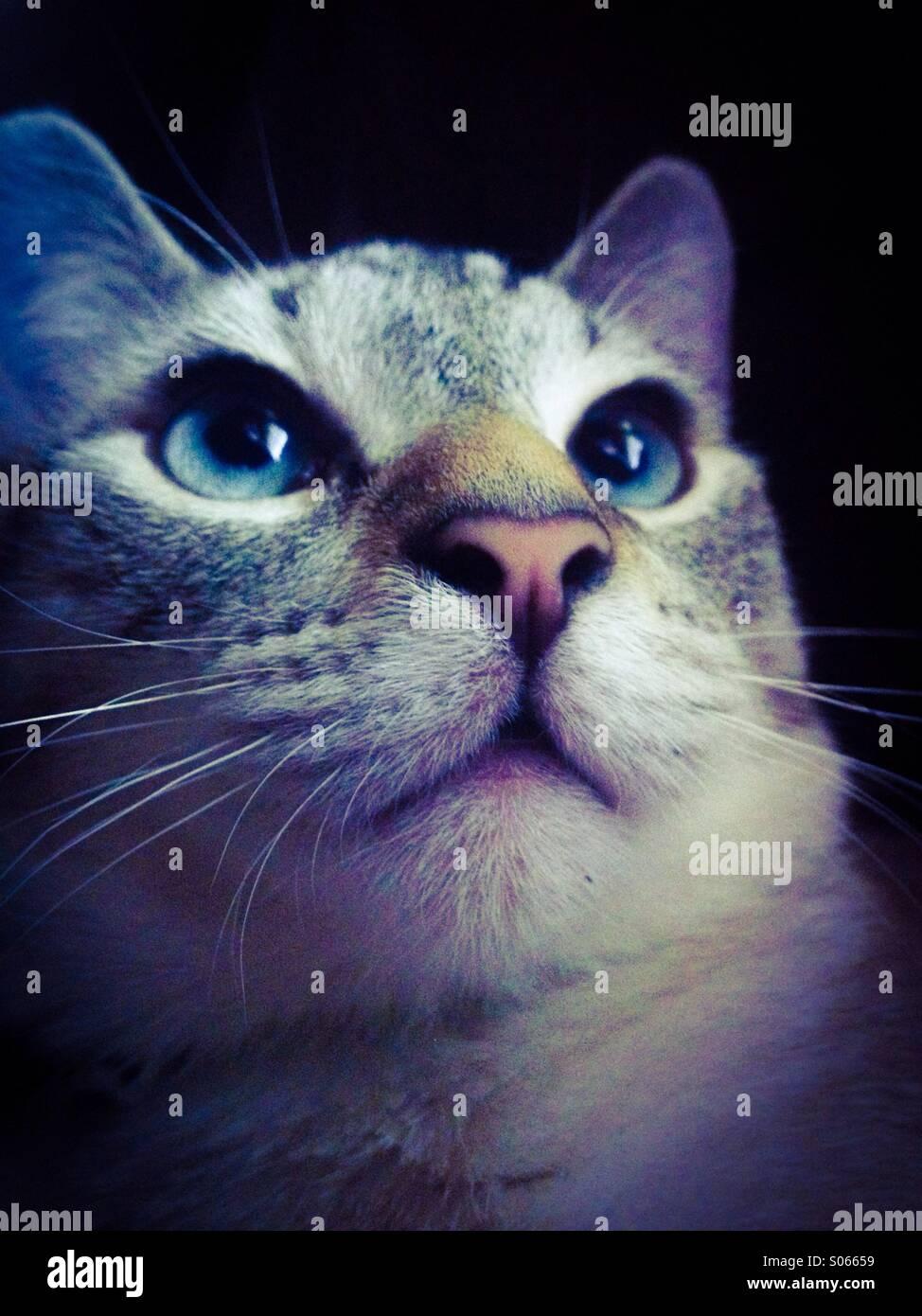Gli occhi blu Immagini Stock