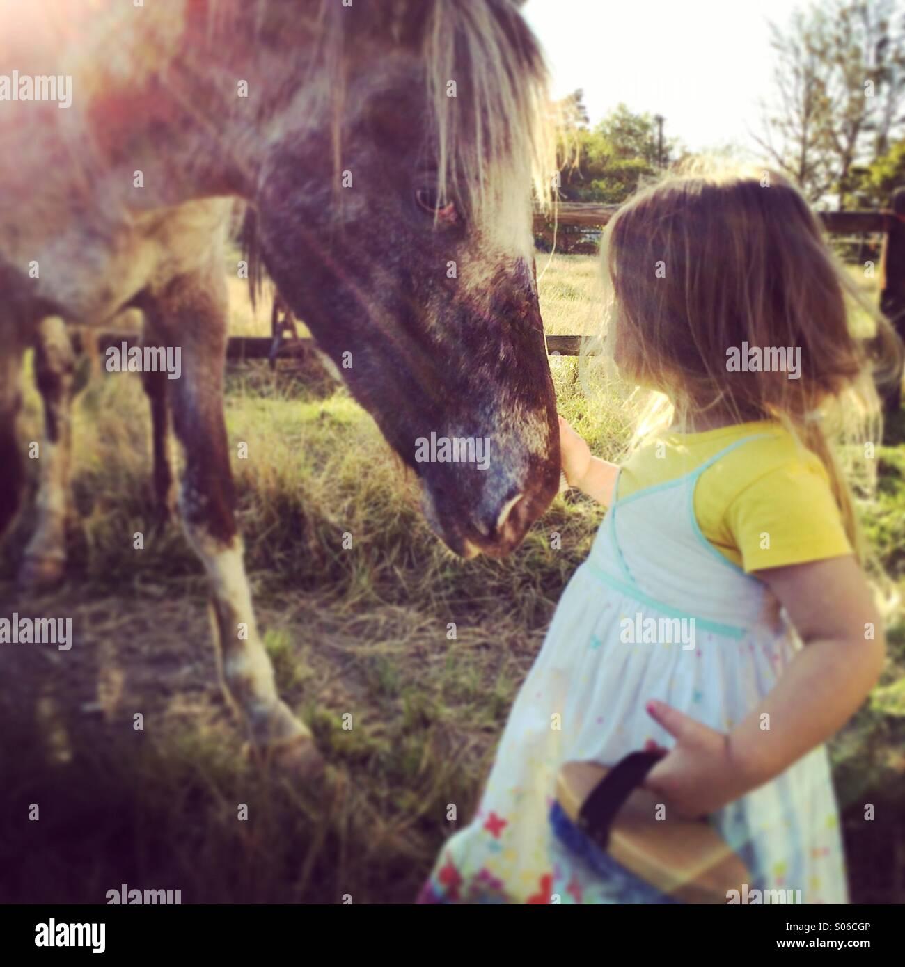 Cura del cavallo Immagini Stock