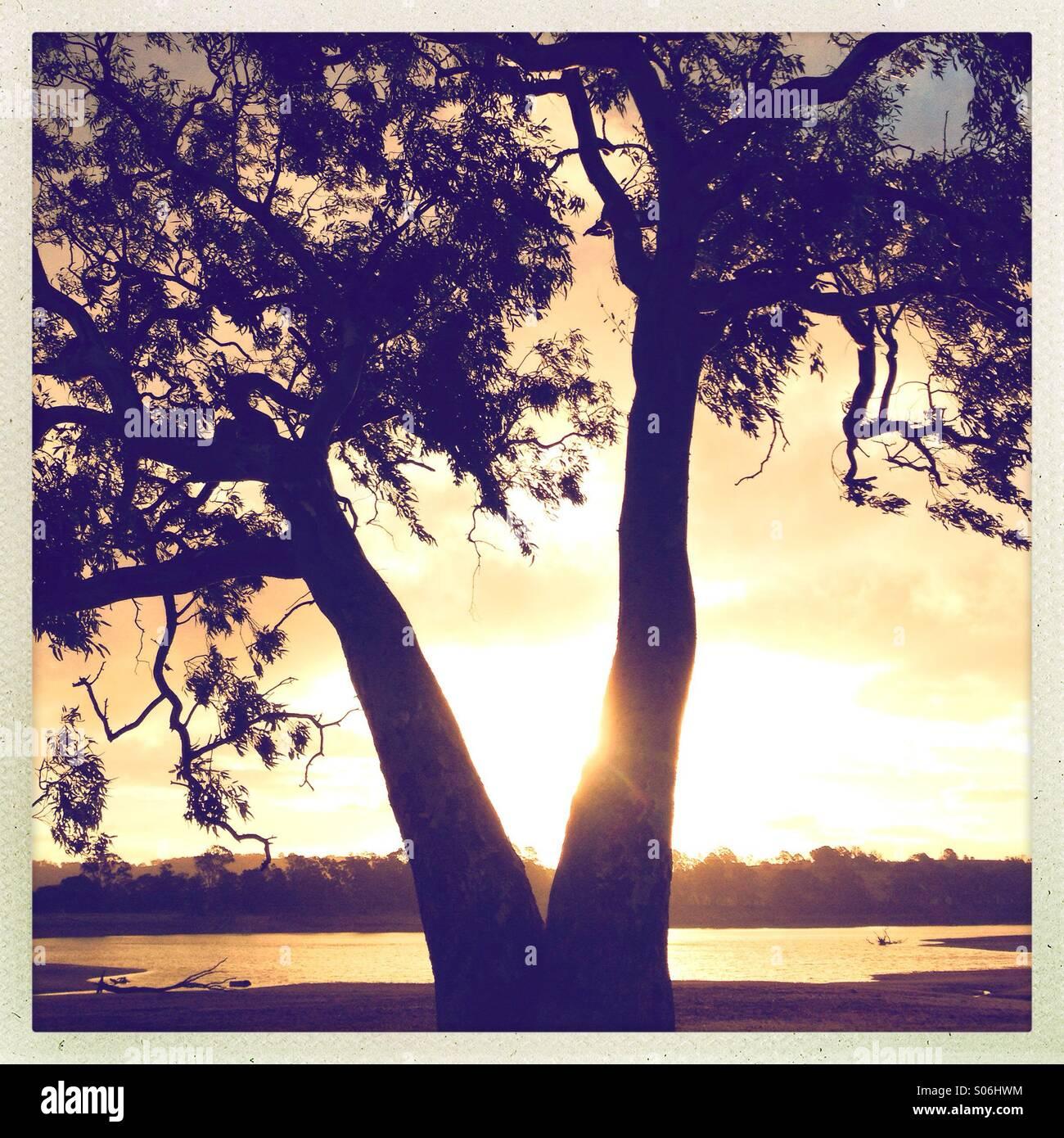 Albero vicino a lago nel tardo pomeriggio la luce Immagini Stock