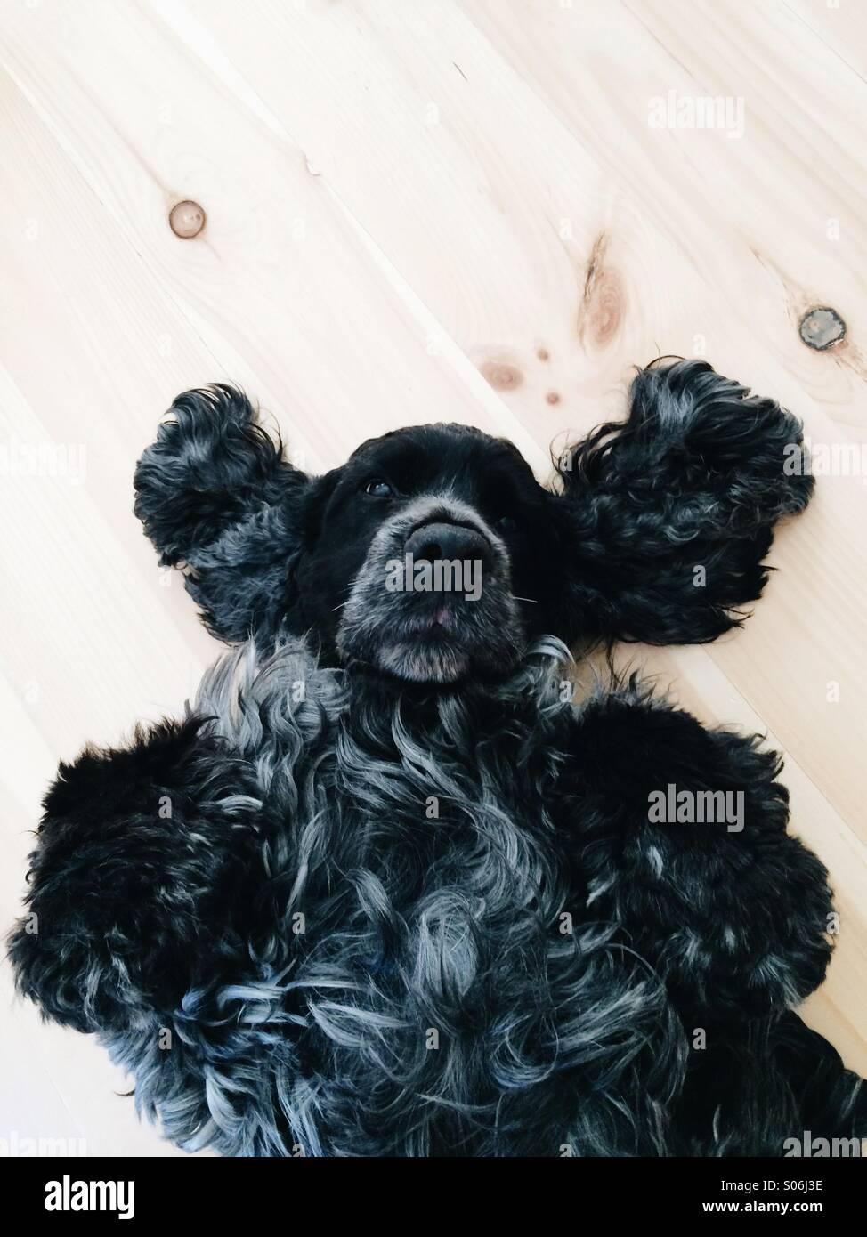 cucciolo rilassante Immagini Stock