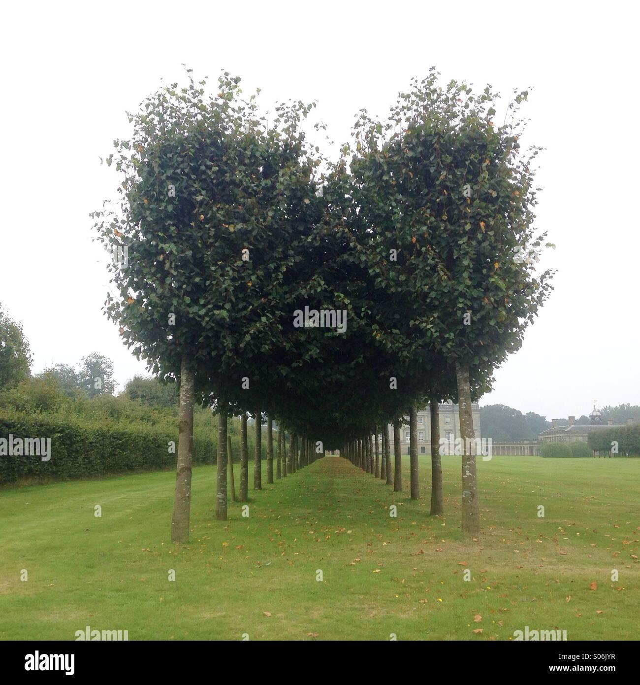 Amore a forma di cuore ad alberi. Immagini Stock